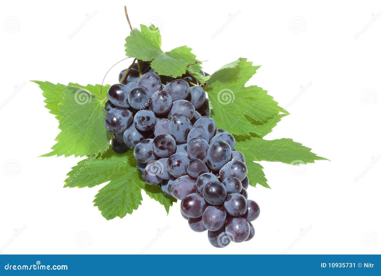 голубые листья виноградины