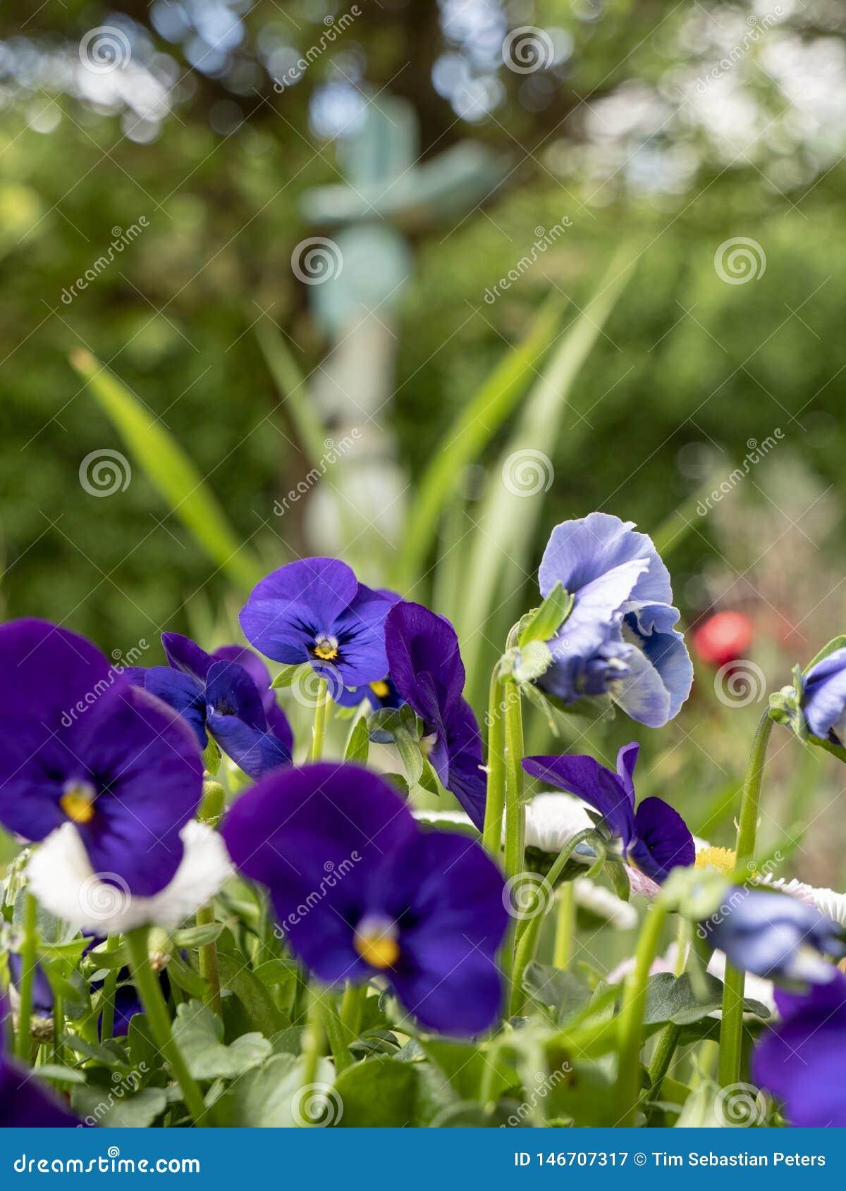Голубые цветки в саде