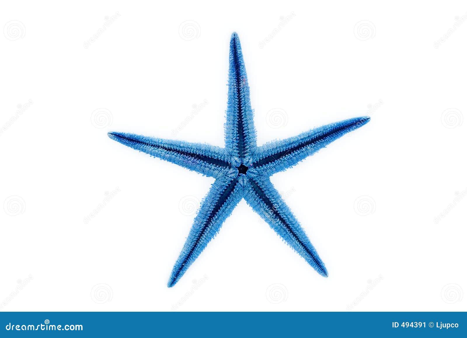 голубые starfish