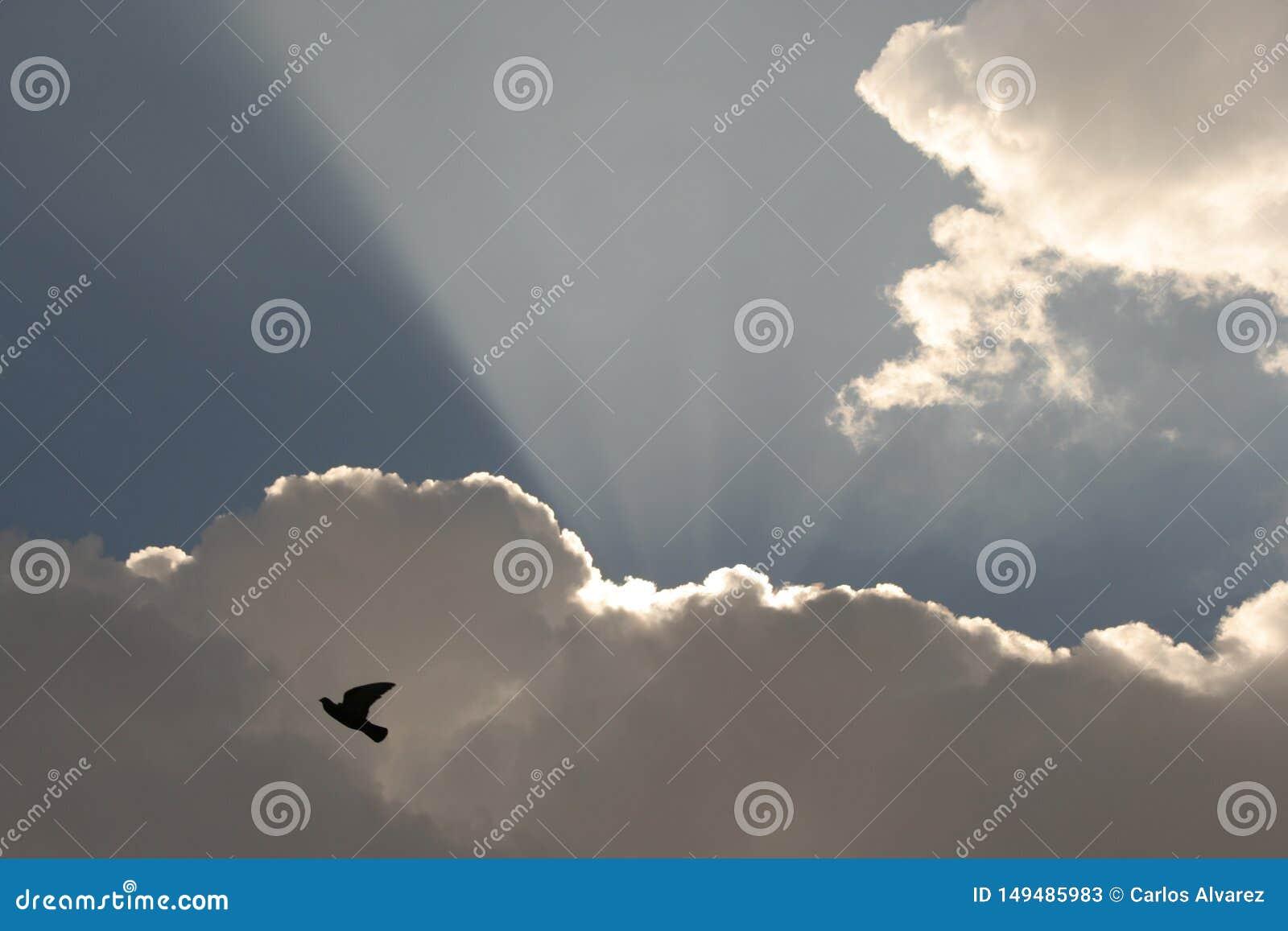 Голубь на облаках с