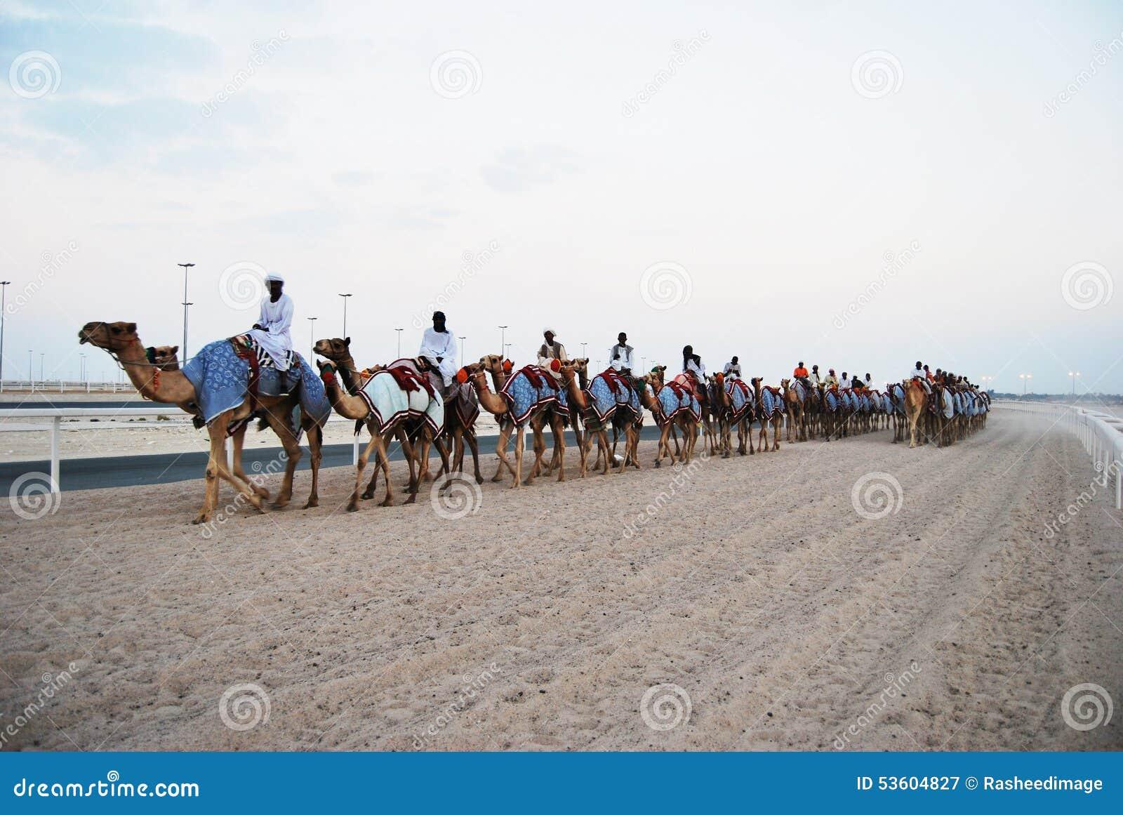 Гонка верблюда, Доха, Катар