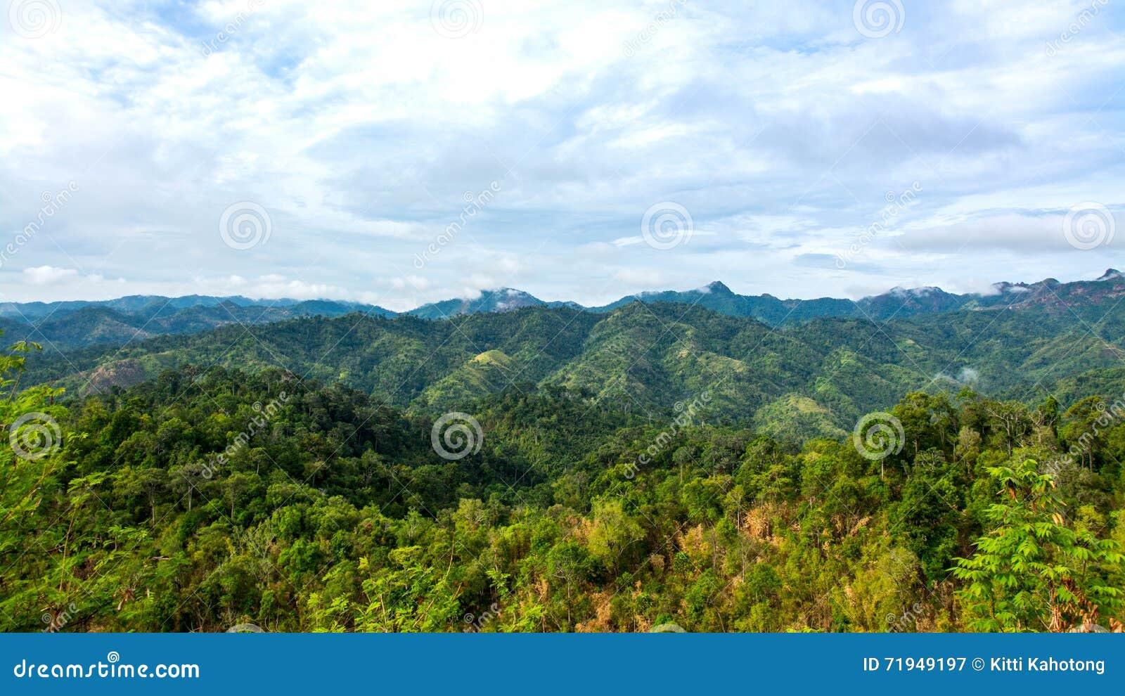 Гора и деревья дождевого леса