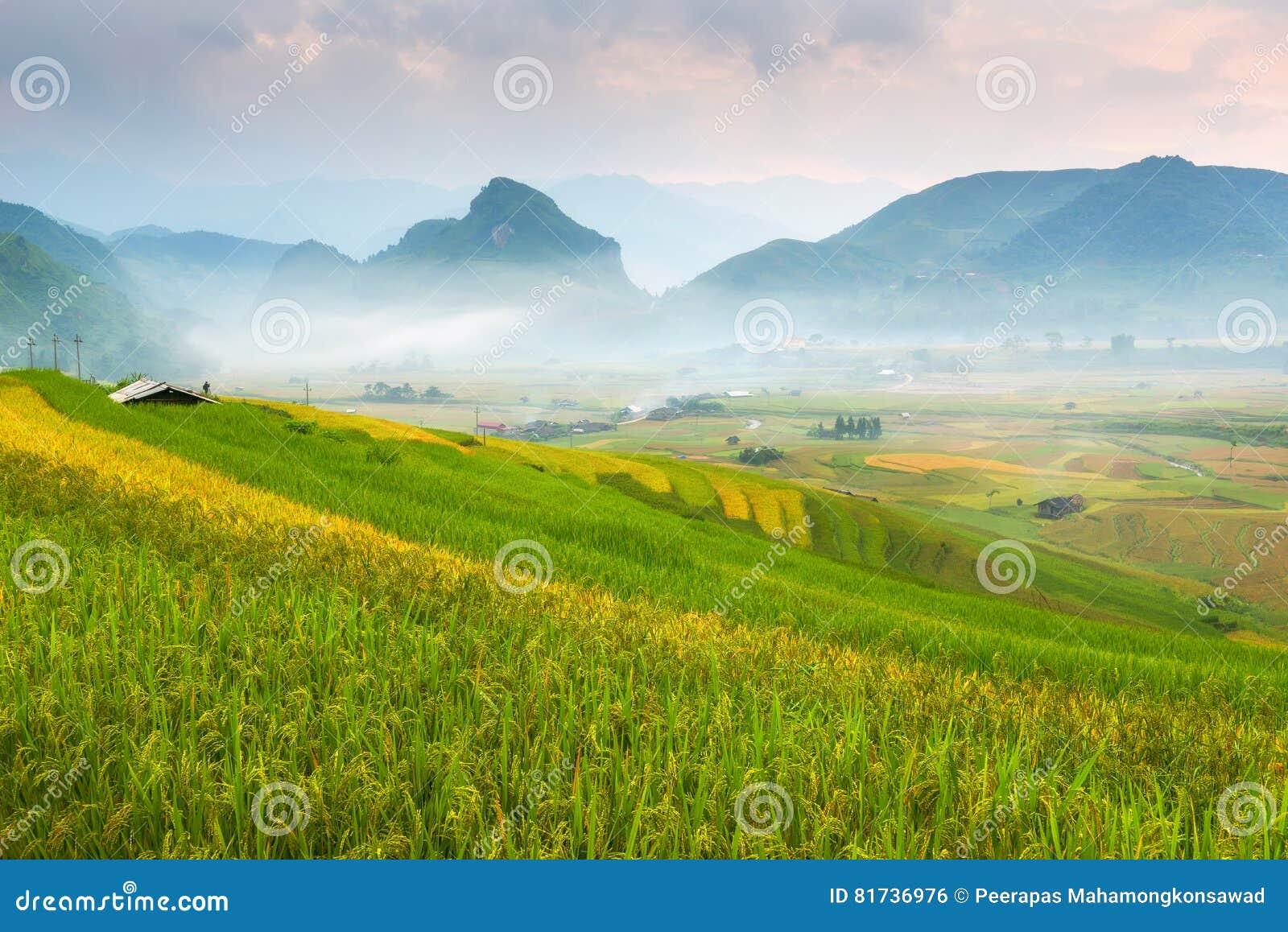 Гора и природа в террасе риса ландшафта Вьетнама