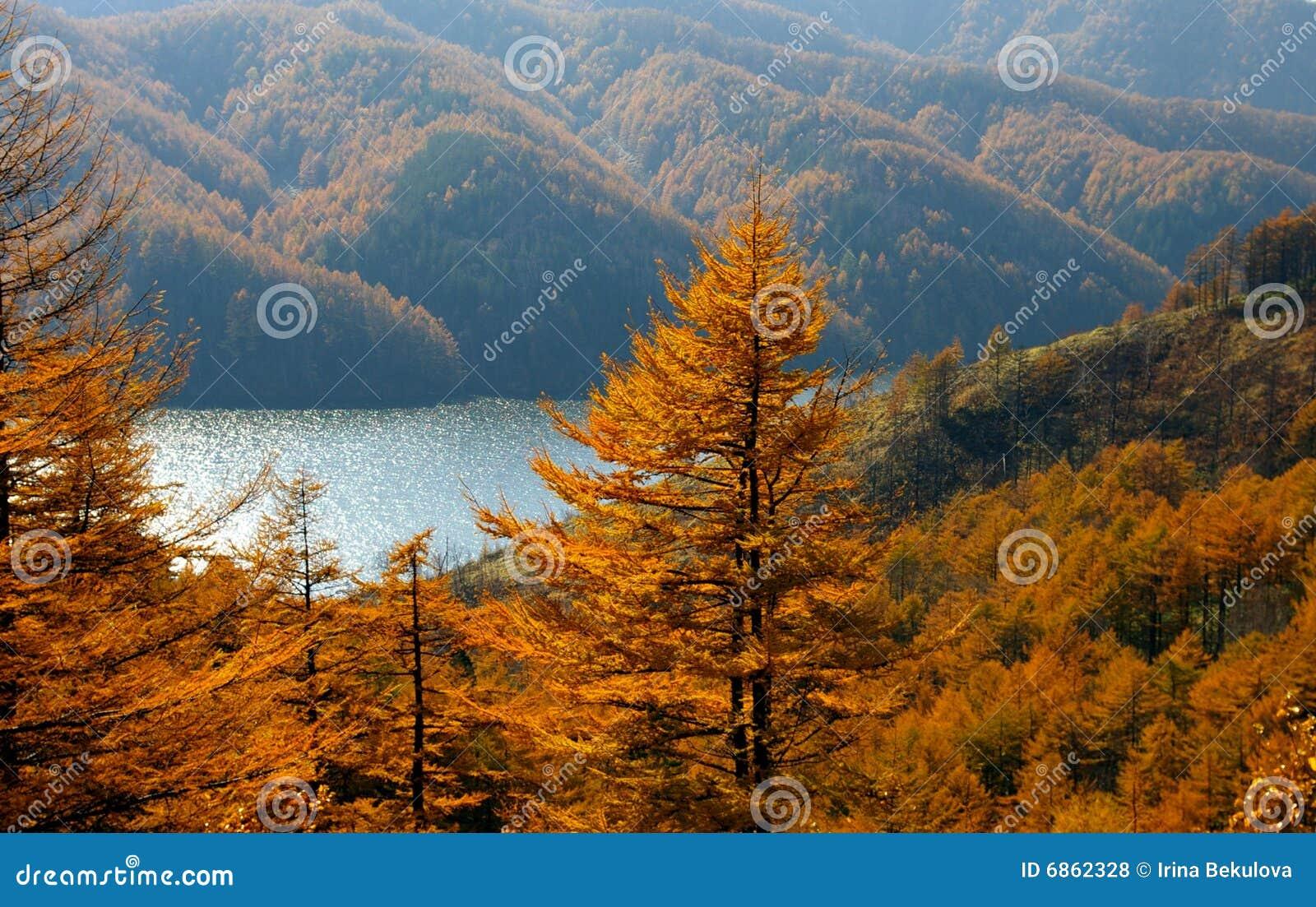 гора лиственниц озера осени