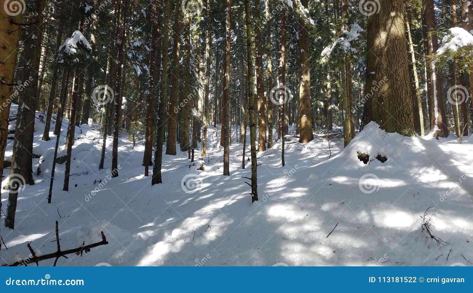 Гора снега с темносиним небом Прикарпатский, Украина, Европа Древесина на Mounta