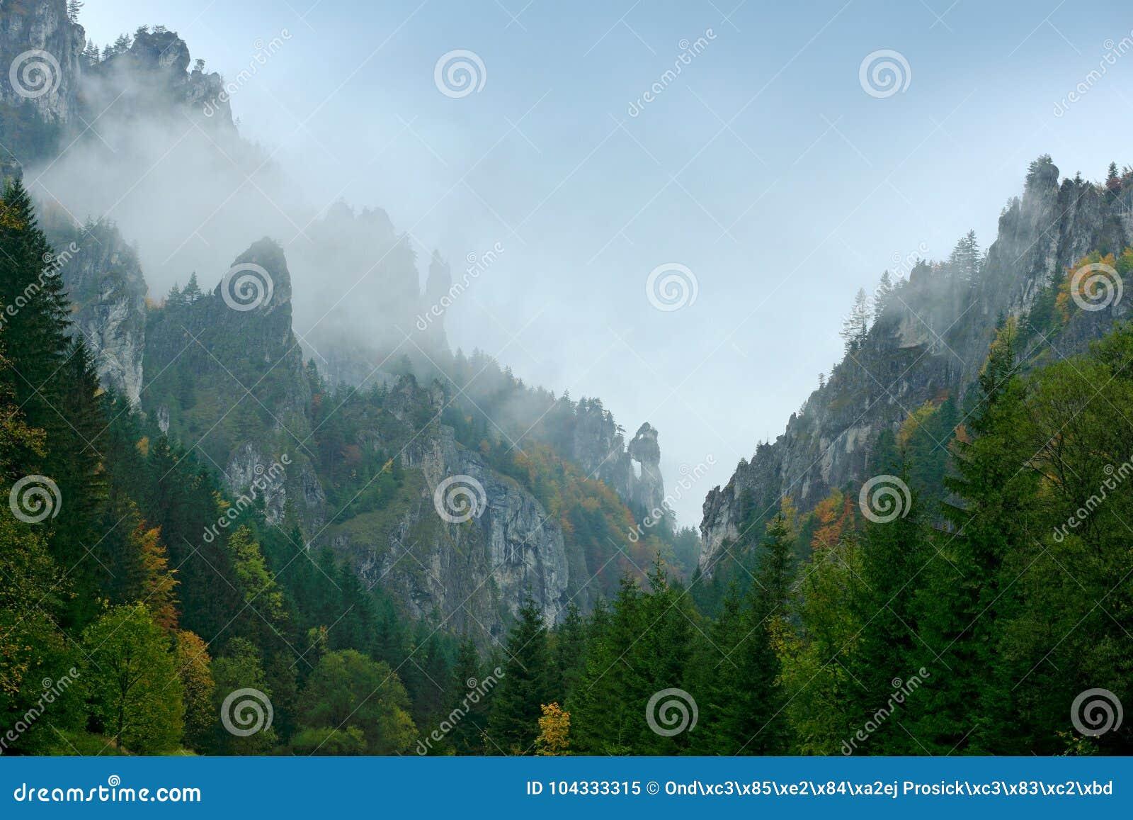 Гора Mala Fatra, Словакия Желтые деревья Лес осени, много деревьев в холмах, ландшафте падения Древесина с деревом цветов день не