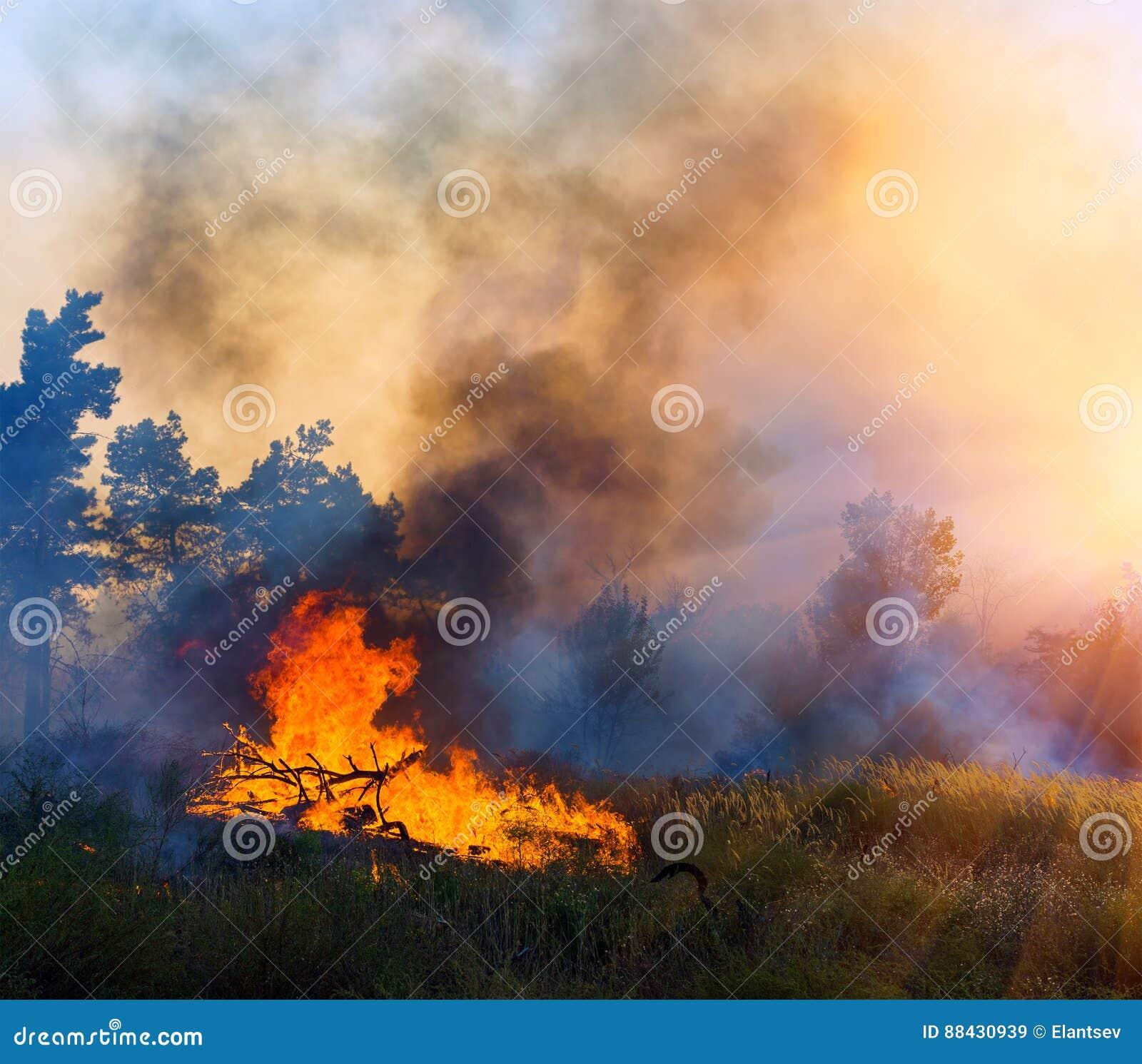 Горение лесного пожара, лесной пожар близкий вверх на времени дня