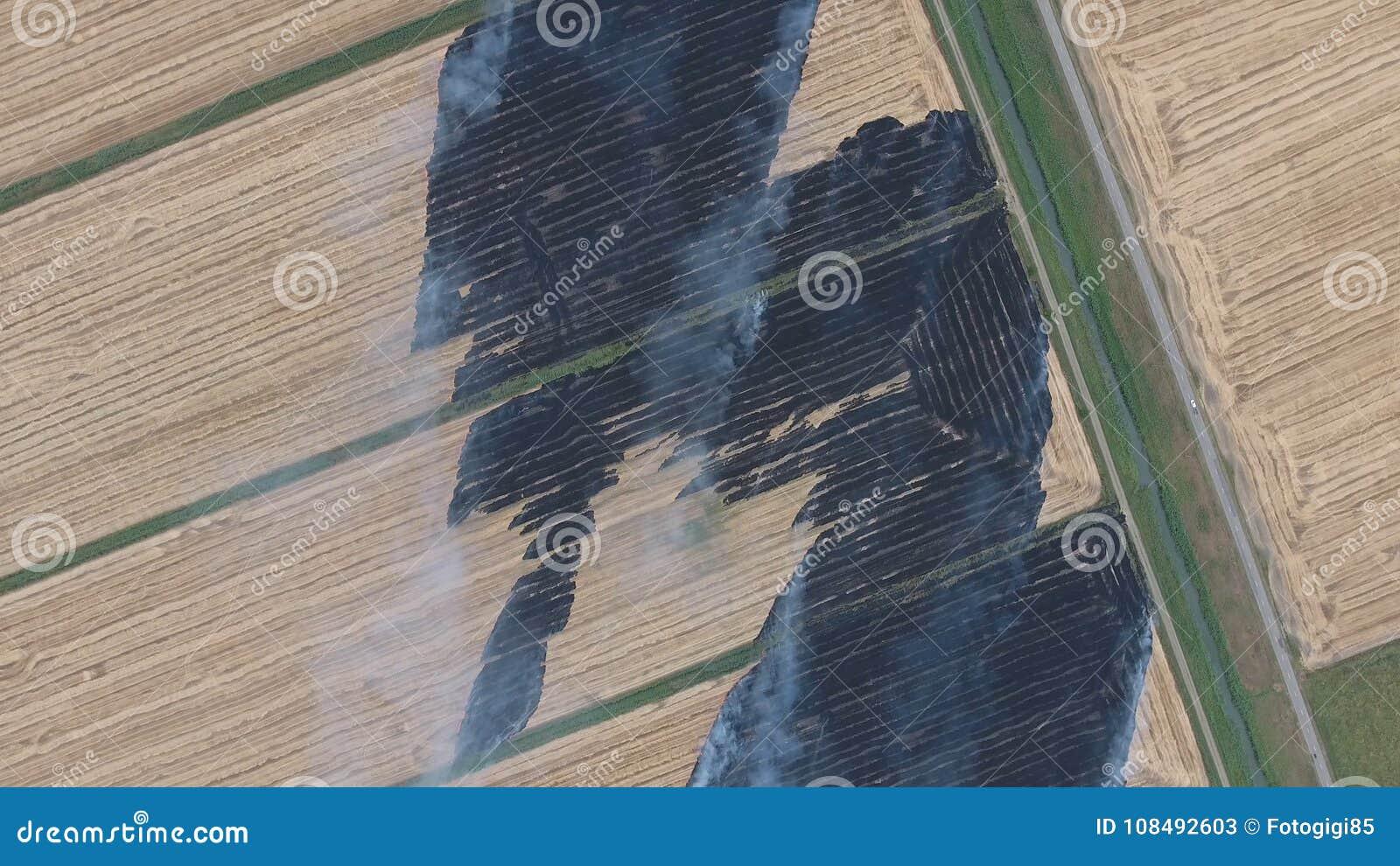 Горение соломы риса в полях Курите от горения соломы риса в проверках Пожар на поле