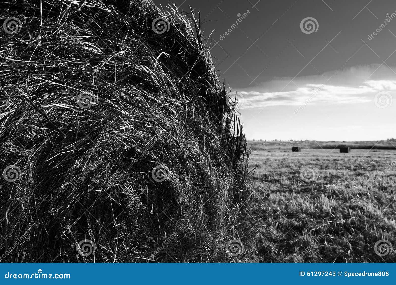 Горизонтальный живой черно-белый стог сена