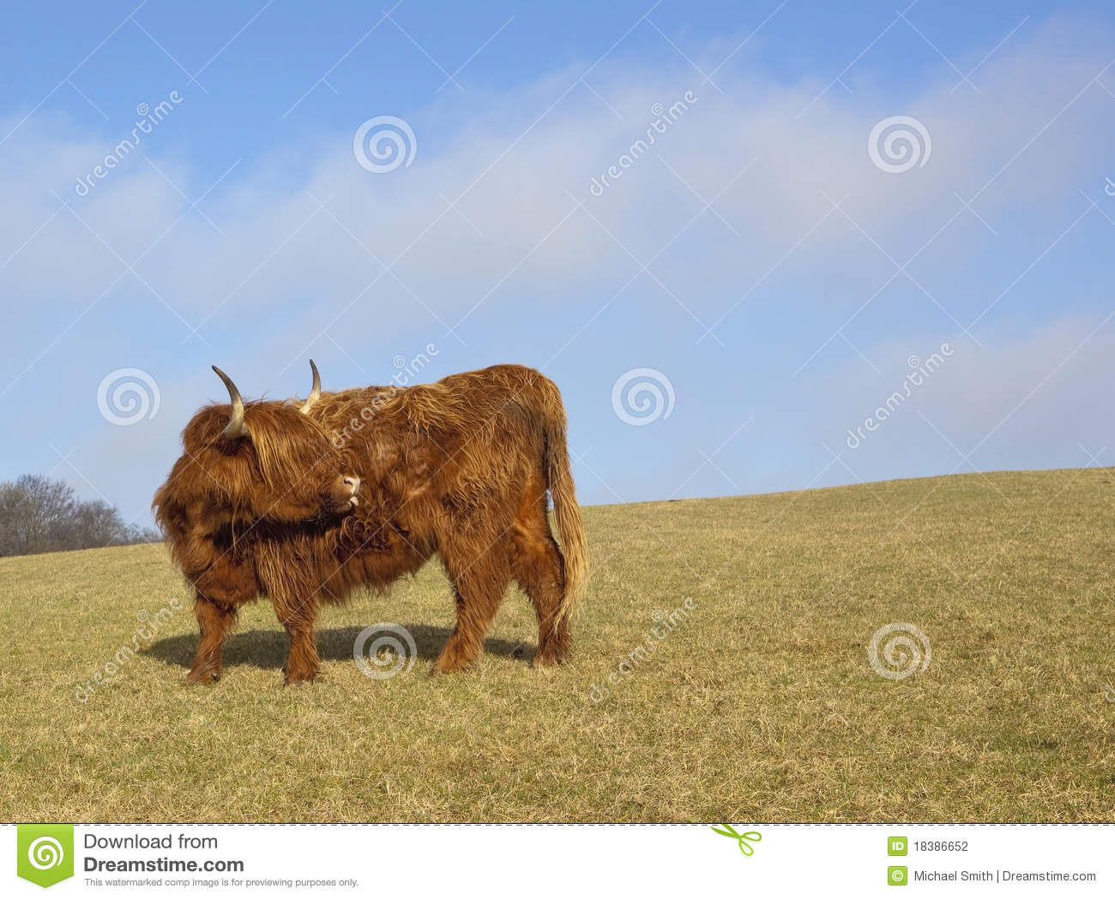 гористая местность 2 коров