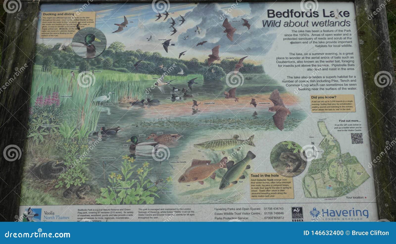 Город Лондона озера парк Бедфорда Havering