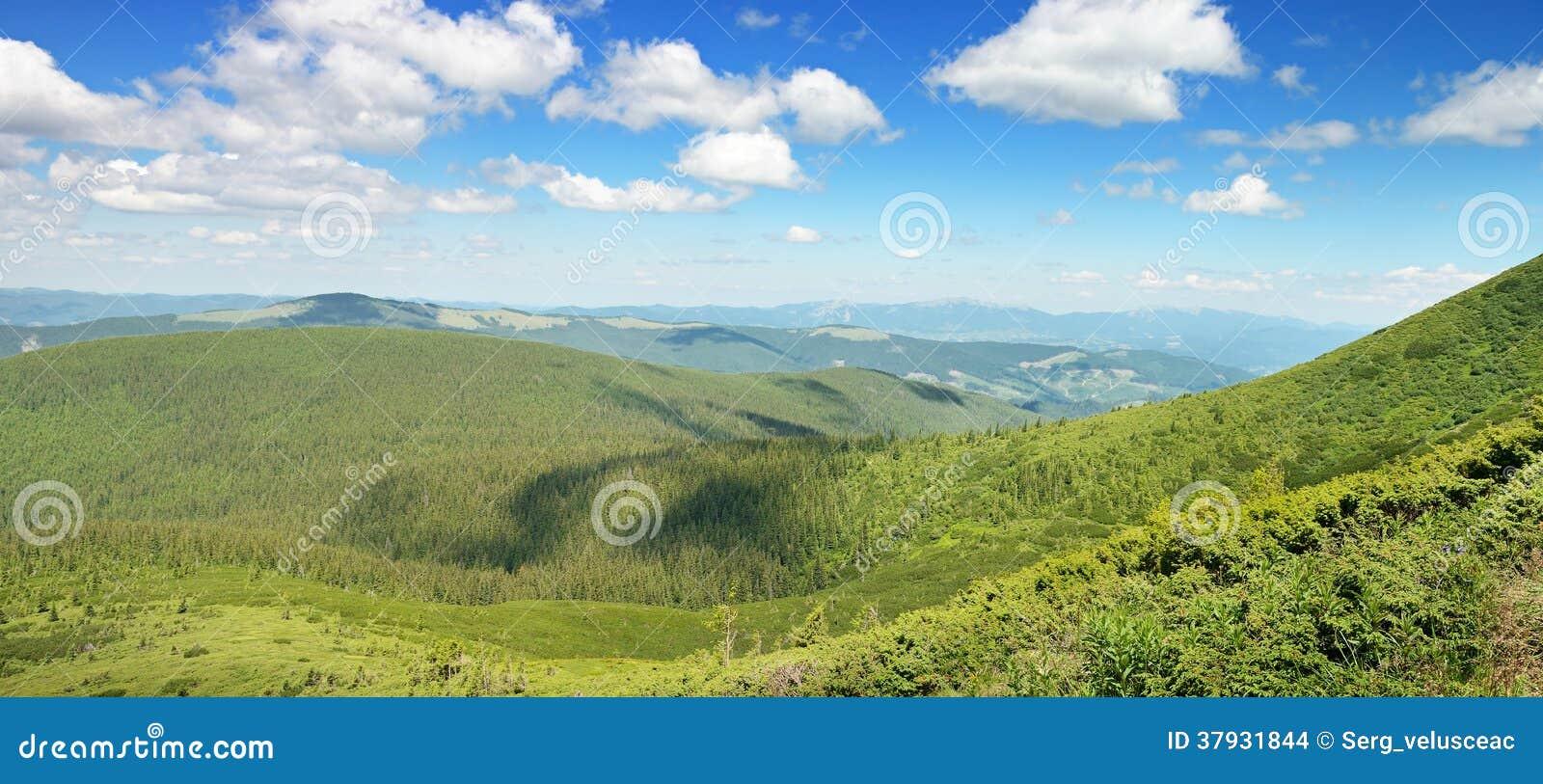 Горы покрыли деревья