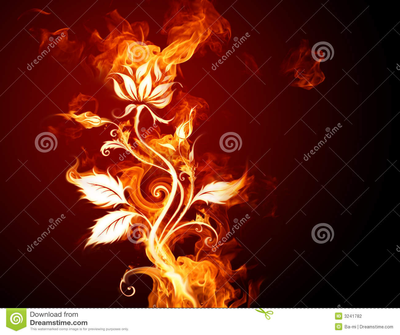 Стоковая фотография горящий цветок