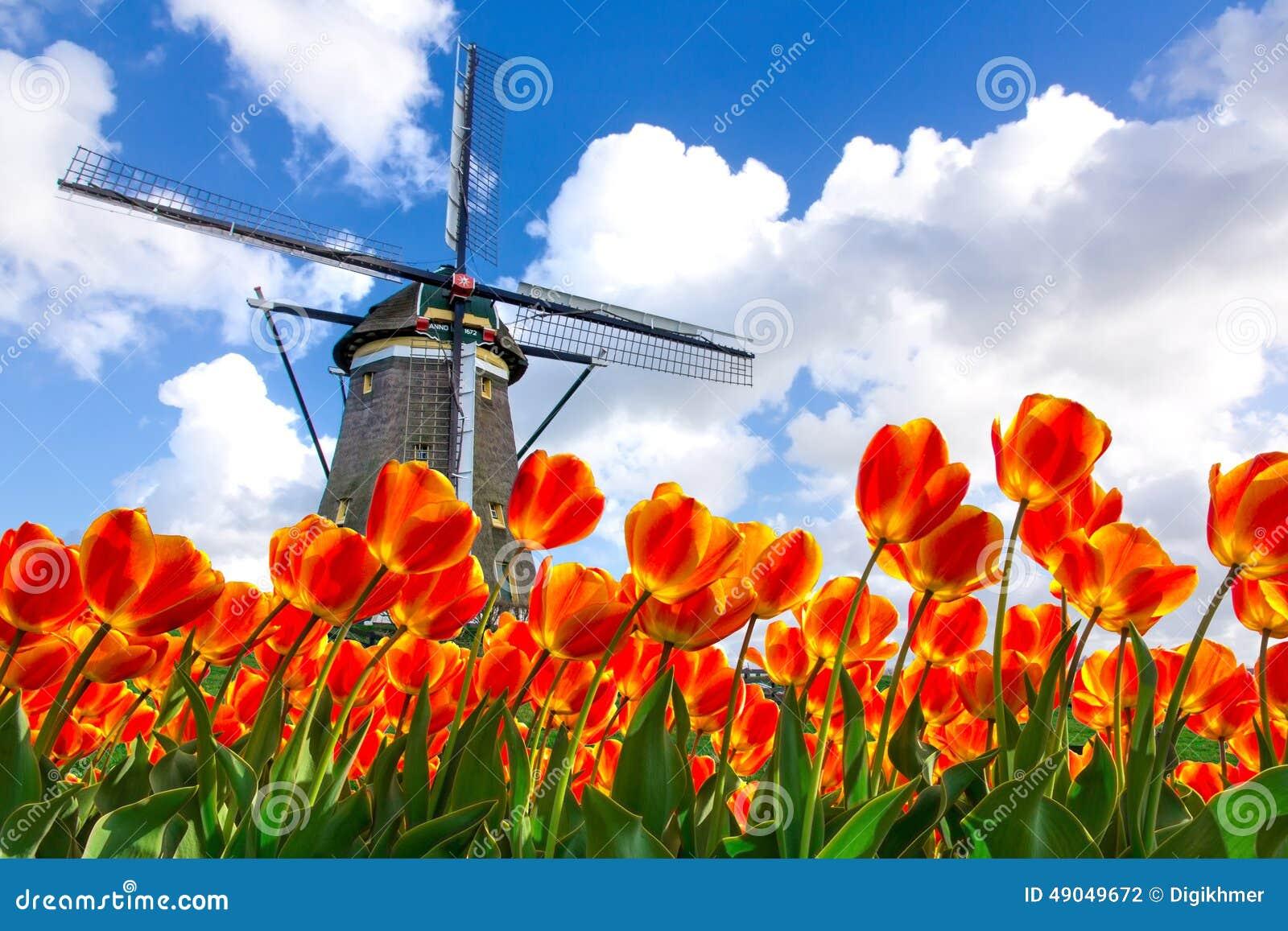 голландская ветрянка тюльпана ландшафта