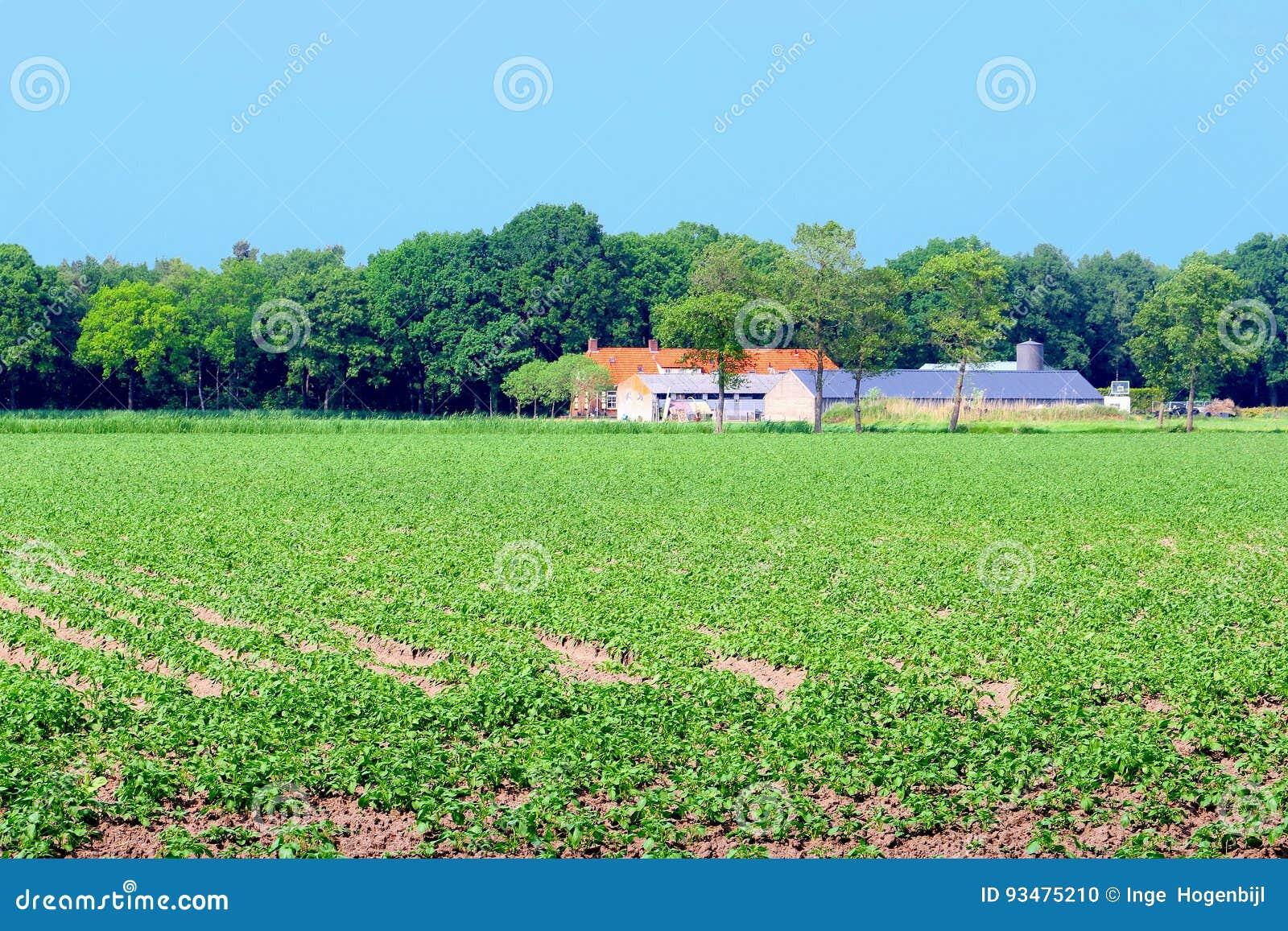 Голландский сельский дом подрезывает плантацию полей patatoes, Нидерланды