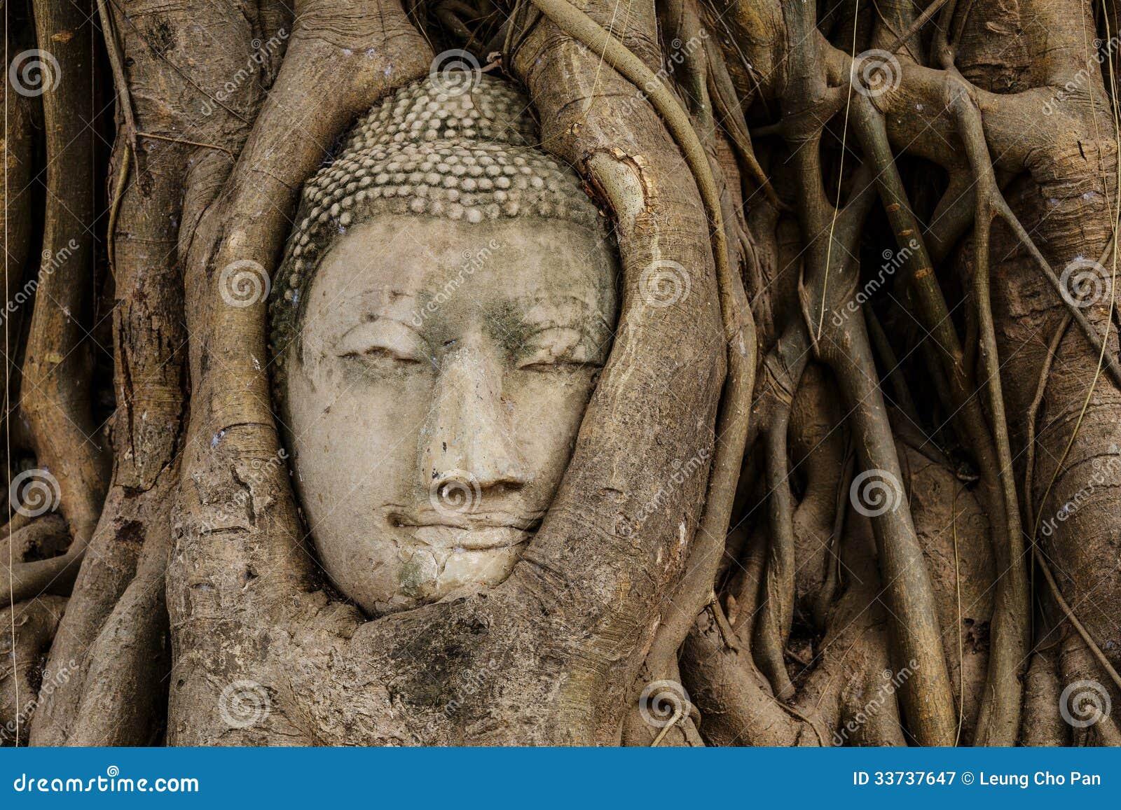 Голова Будды в баньяне
