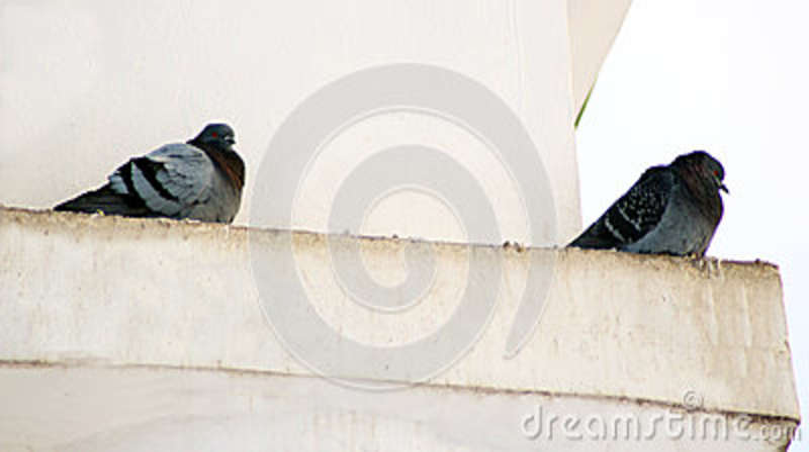 Голуби в зиме, птицы ждать еду внутри