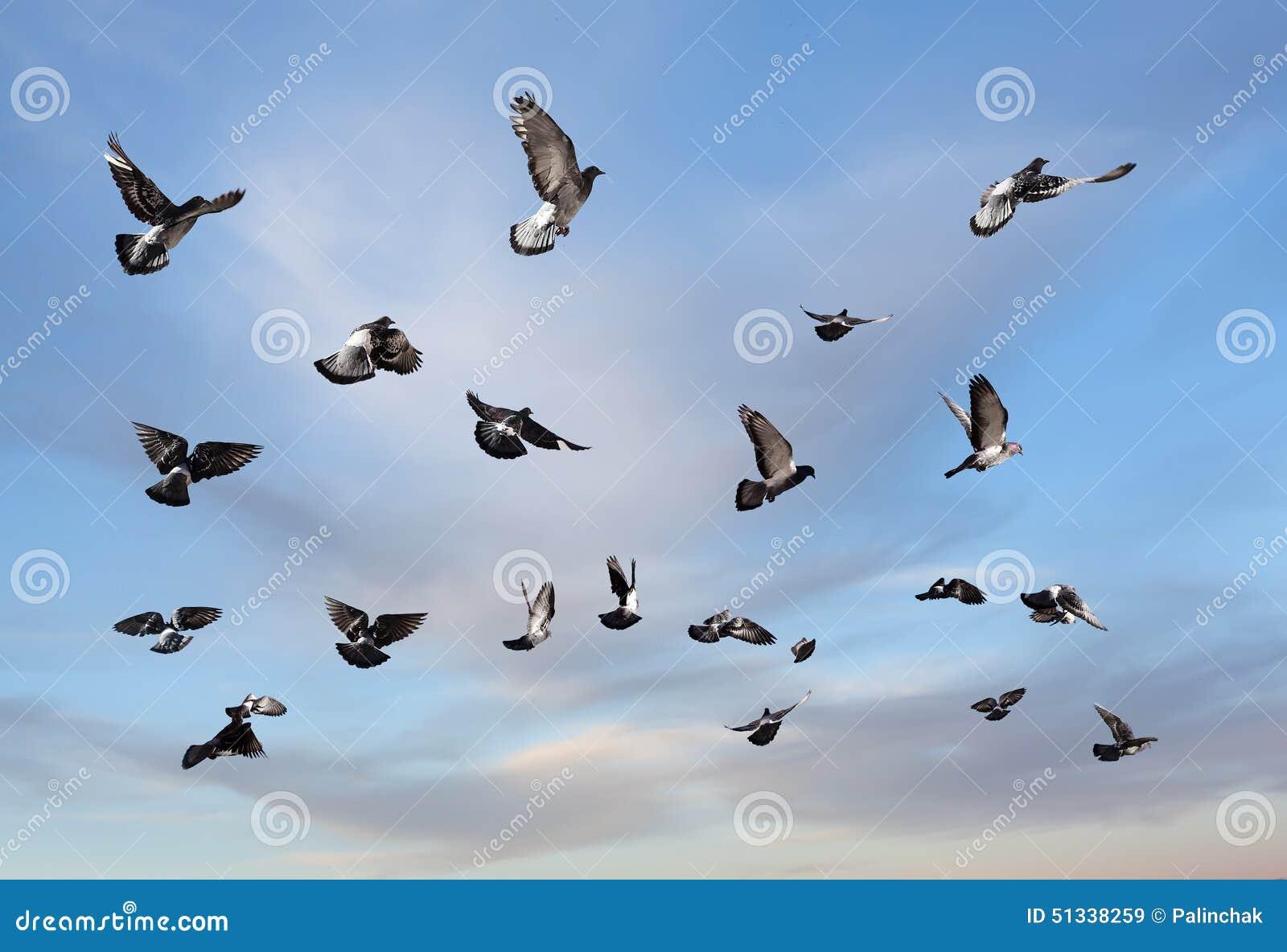 Голуби летания
