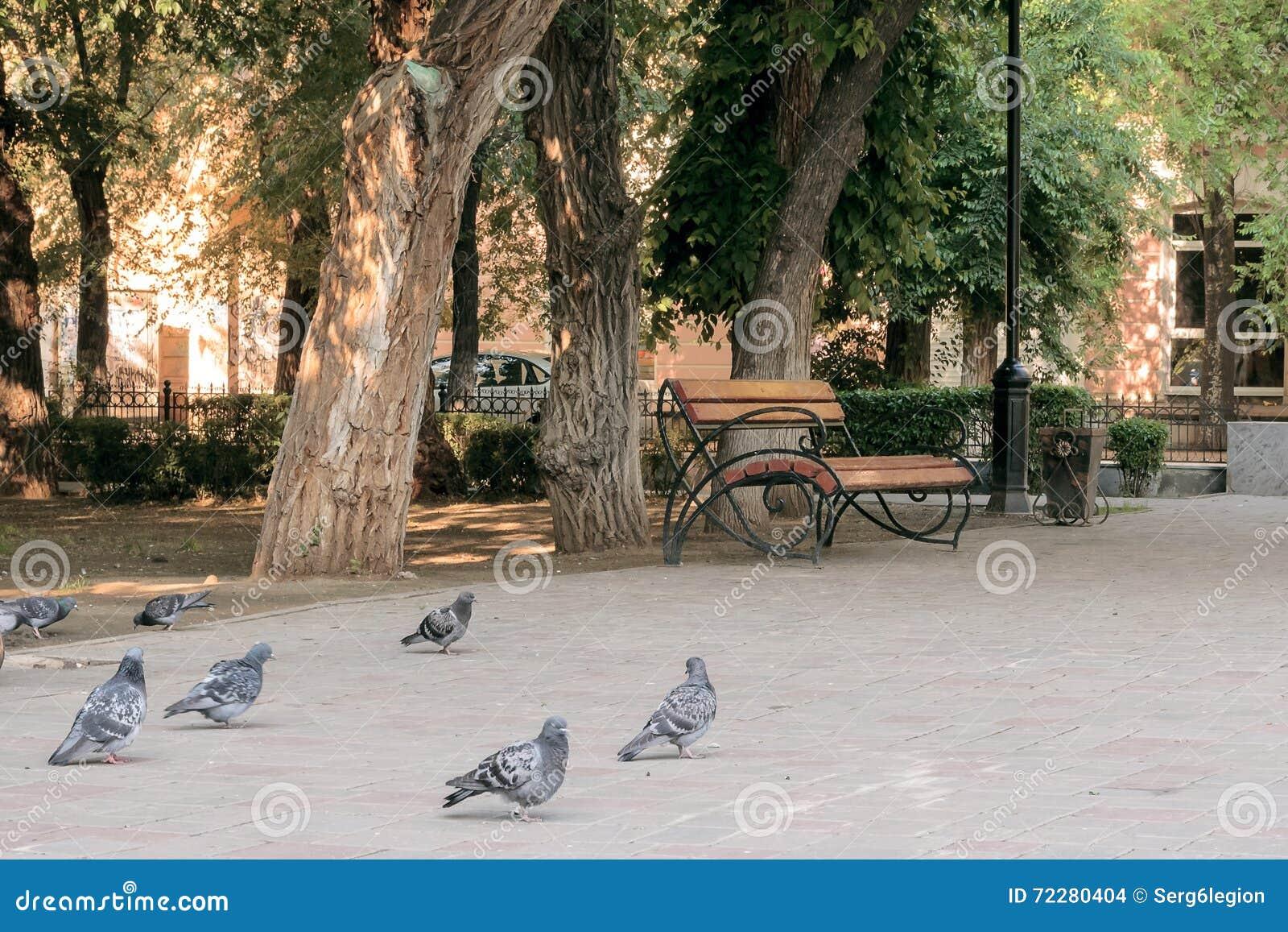 Download Голуби и стенд в парке города Стоковое Фото - изображение насчитывающей парк, селективно: 72280404