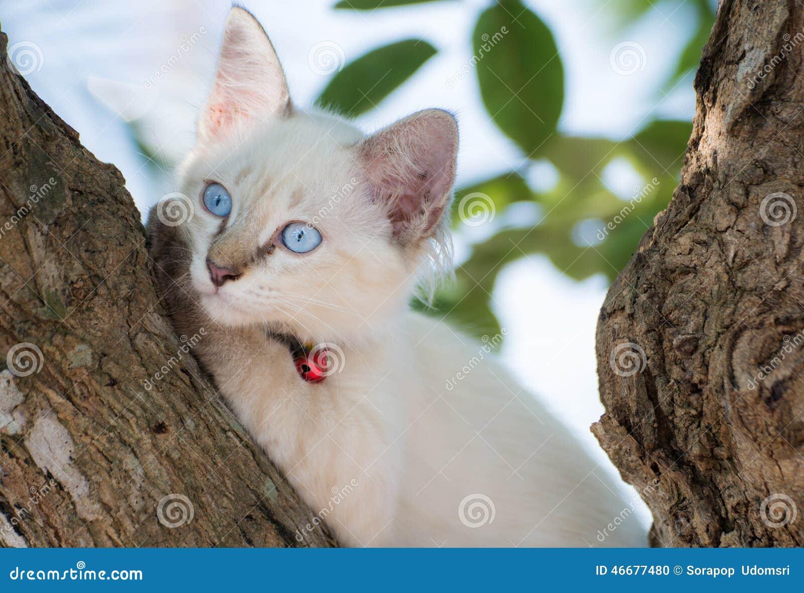 Кот глаз ребенку