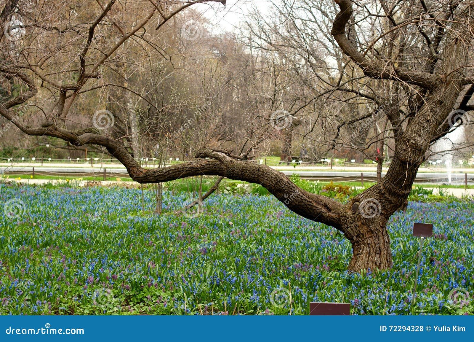 Download Голубой Flowerbed Galanthus Стоковое Фото - изображение насчитывающей ландшафт, бобра: 72294328