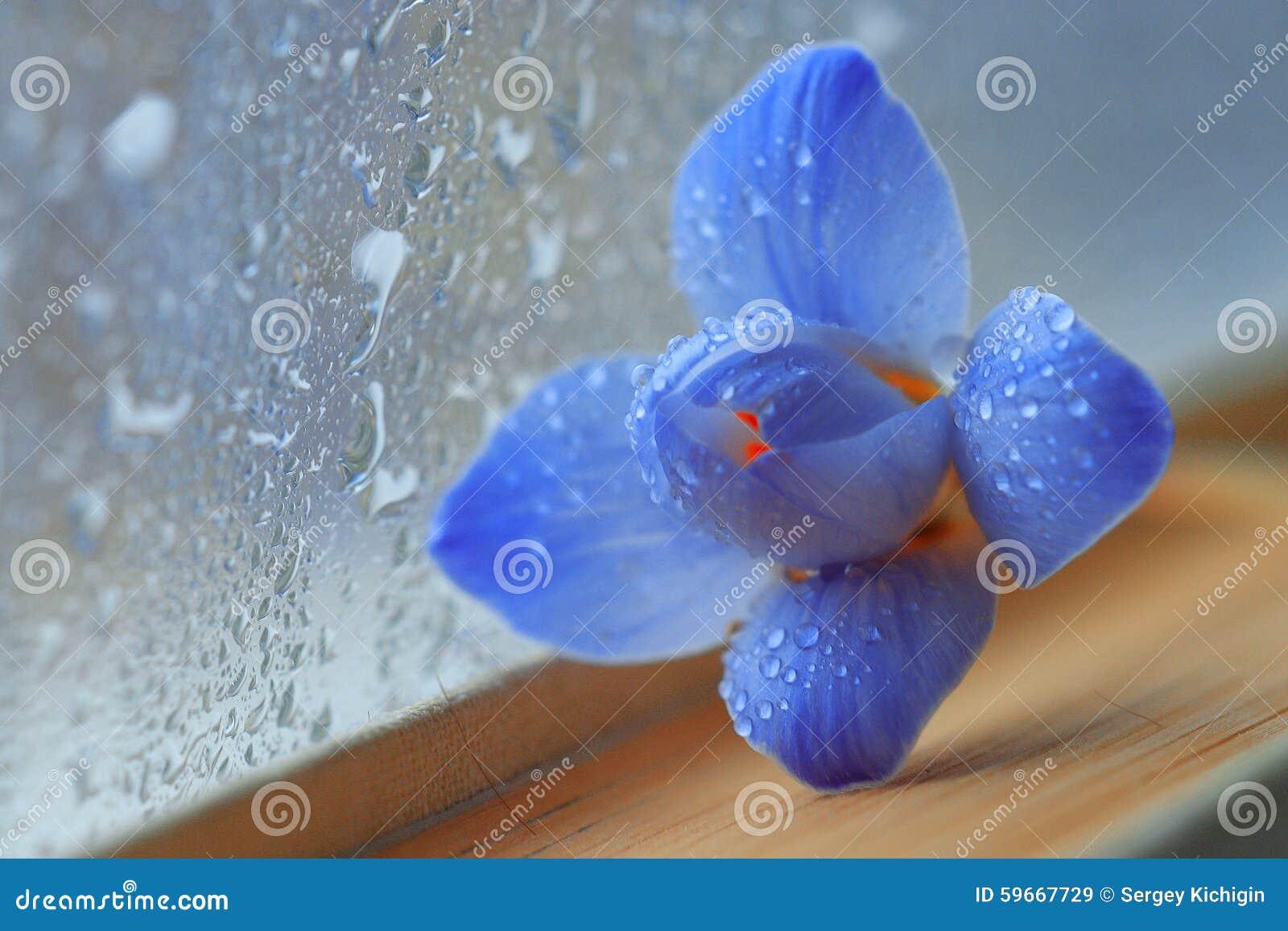 Голубые цветки на романе книги
