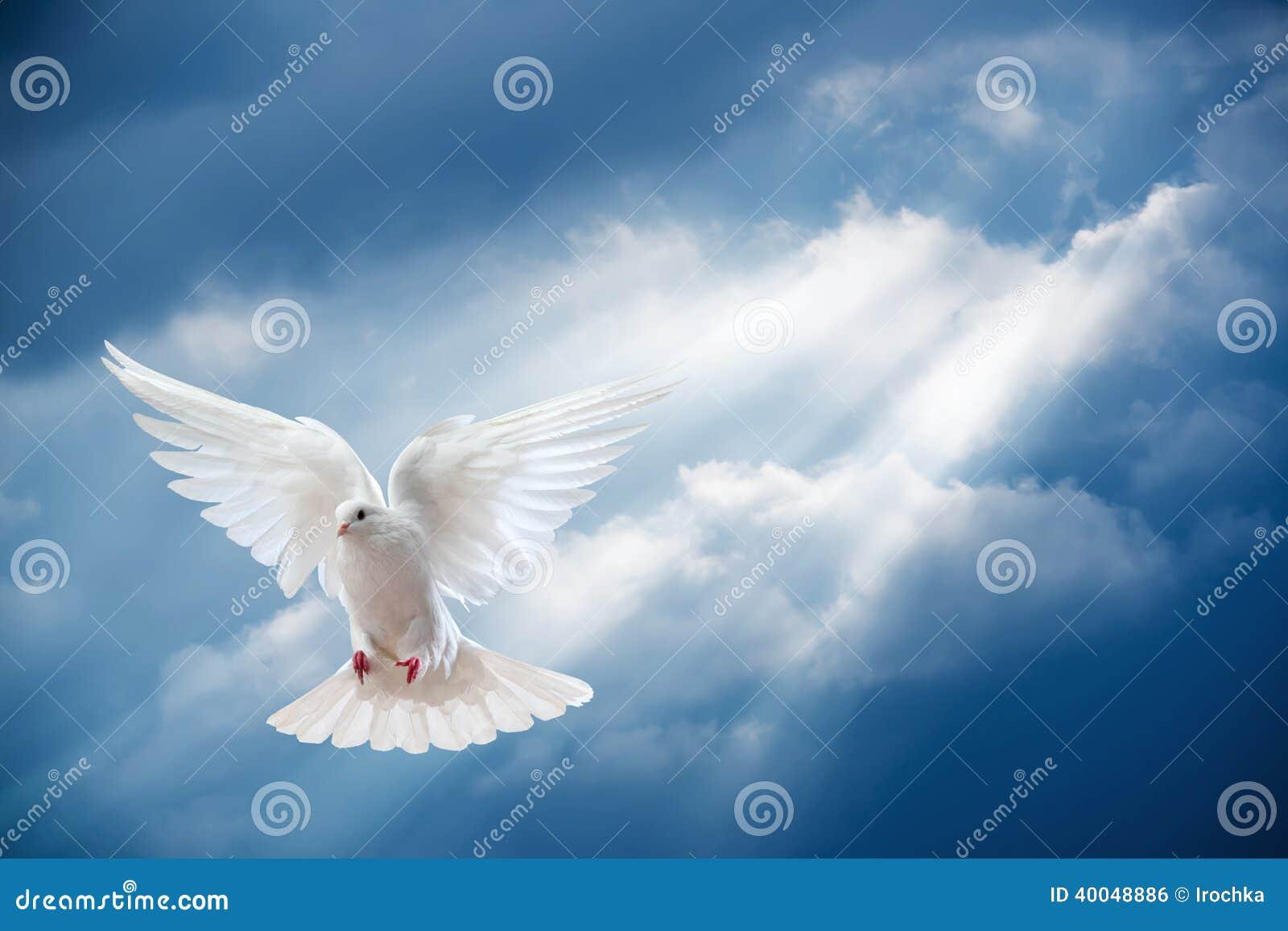 Голубь в воздухе с крылами широкими раскрывает