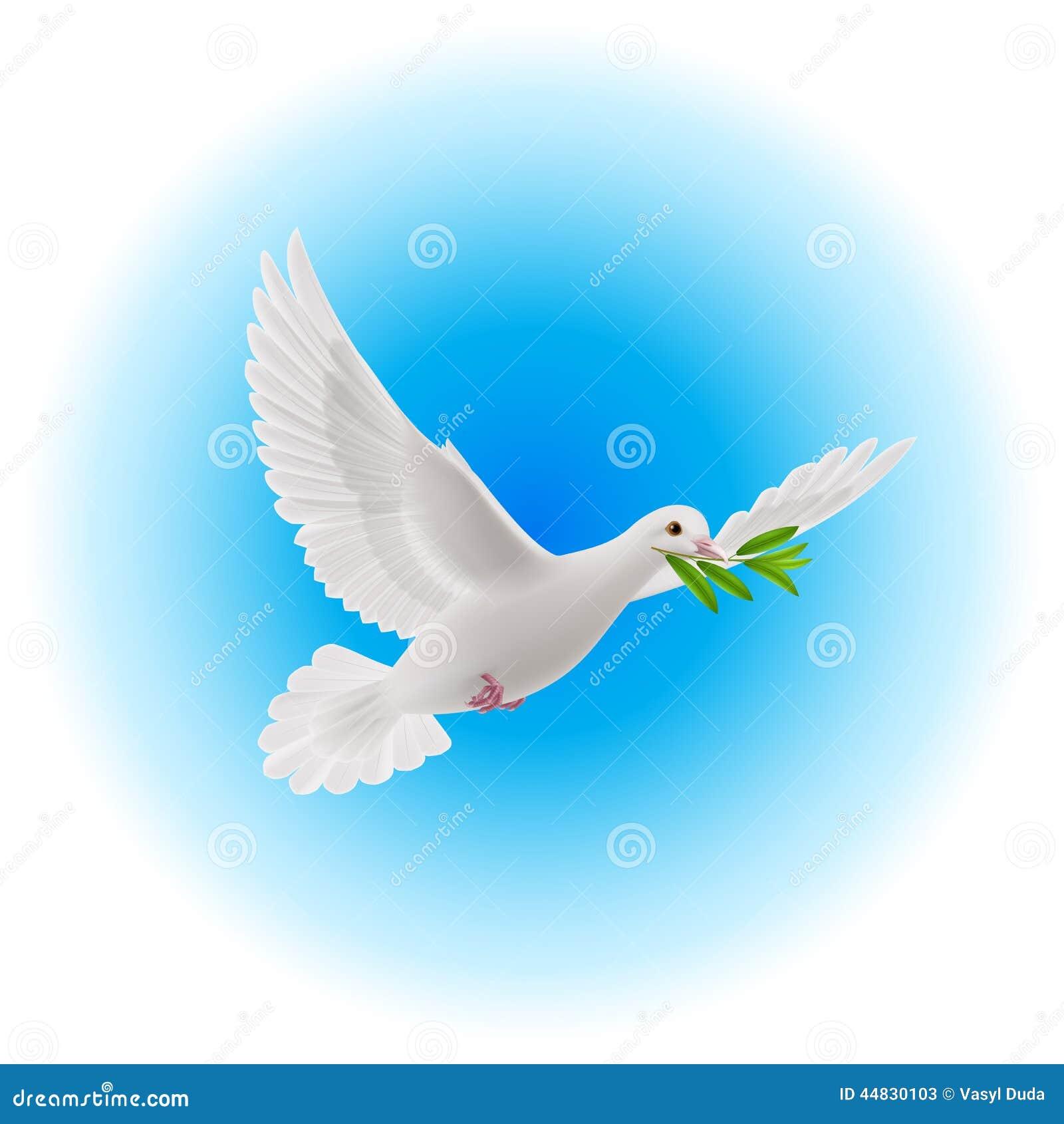 голубь мира скачать картинку