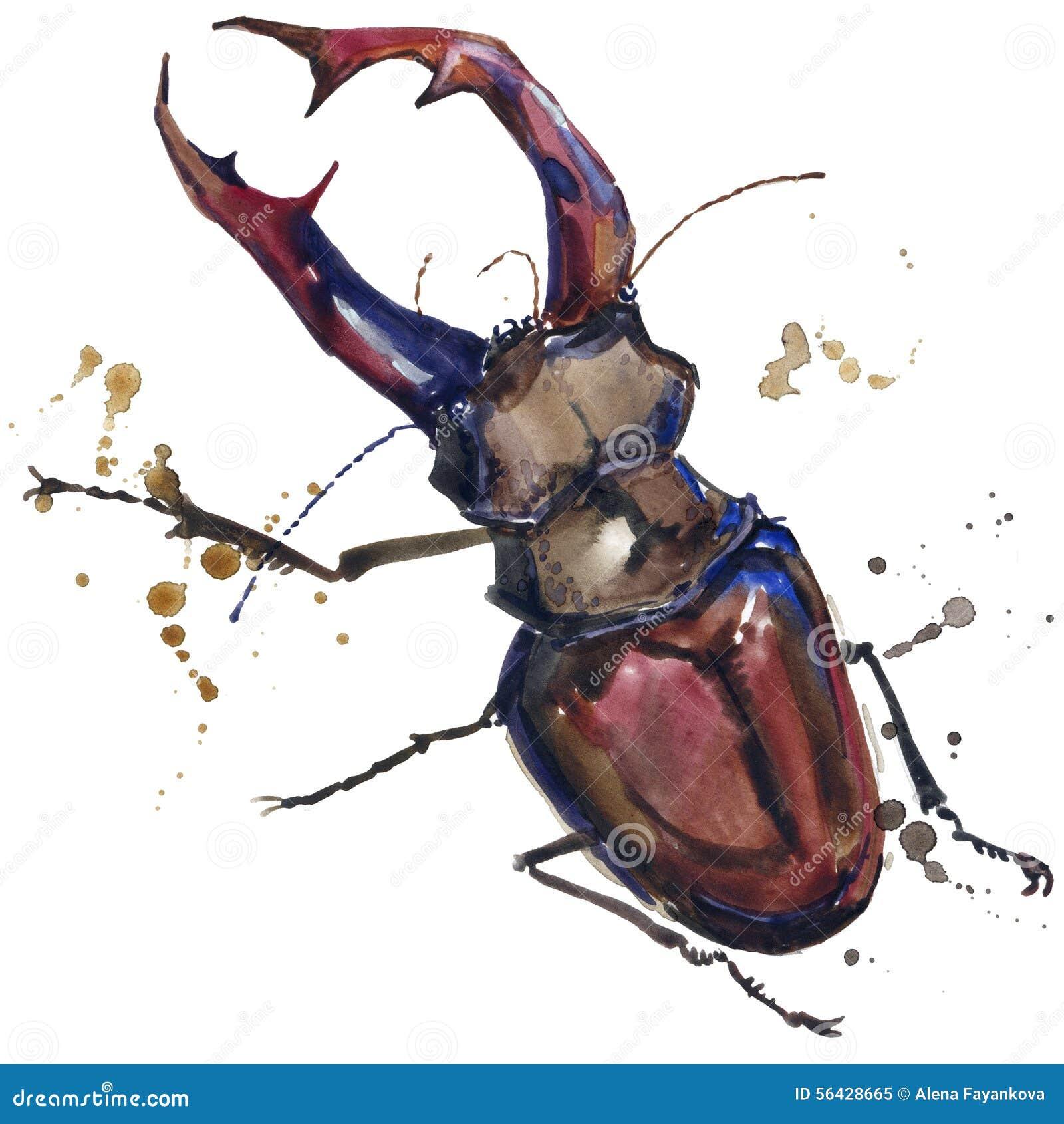 Графики футболки насекомого жука рогача иллюстрация жука рогача с акварелью выплеска текстурировала предпосылку необыкновенное wa