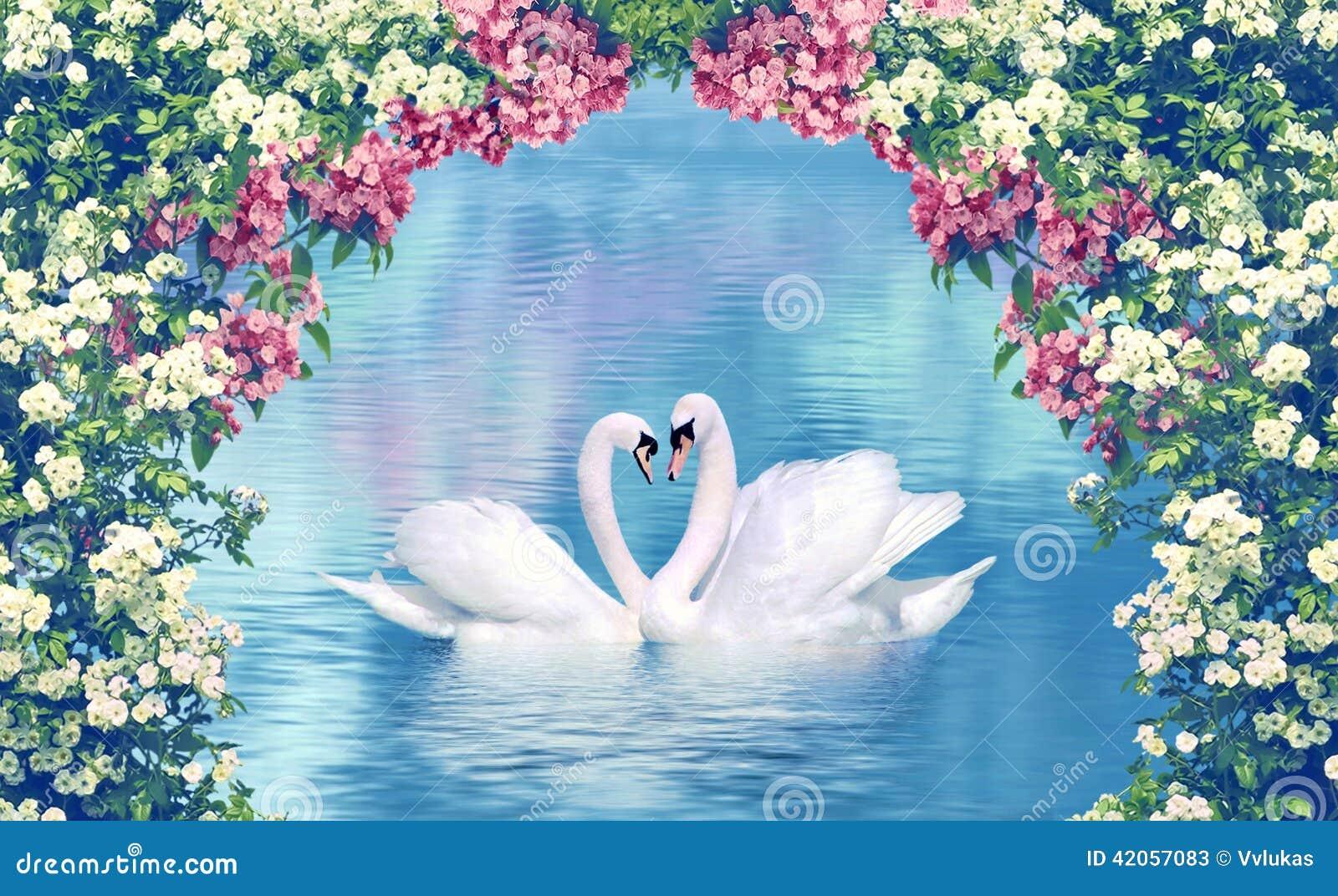 Грациозно лебеди в влюбленности