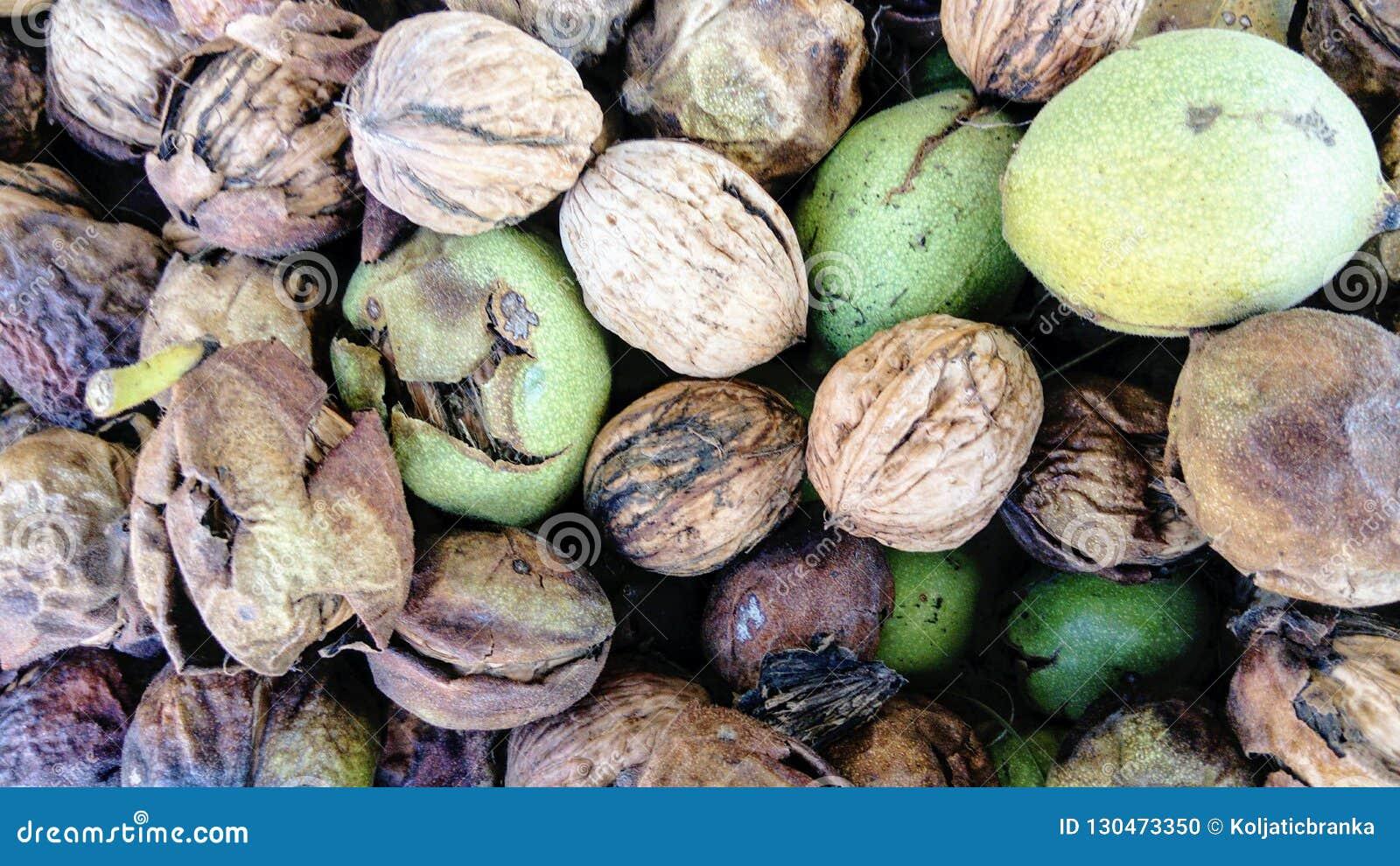 Грецкие орехи свежо скомплектовали на различных этапах
