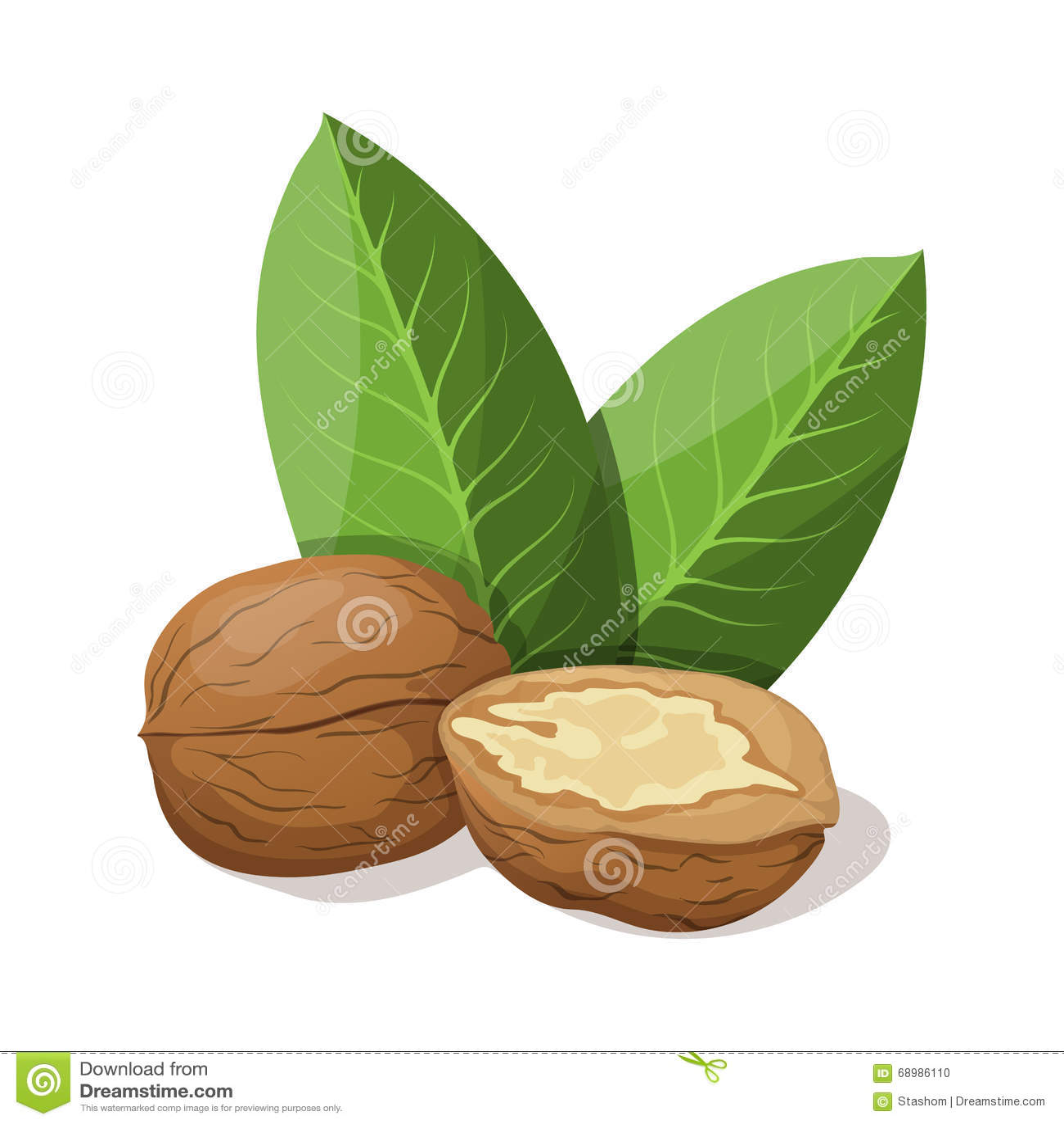 Грецкие орехи с листьями на белизне