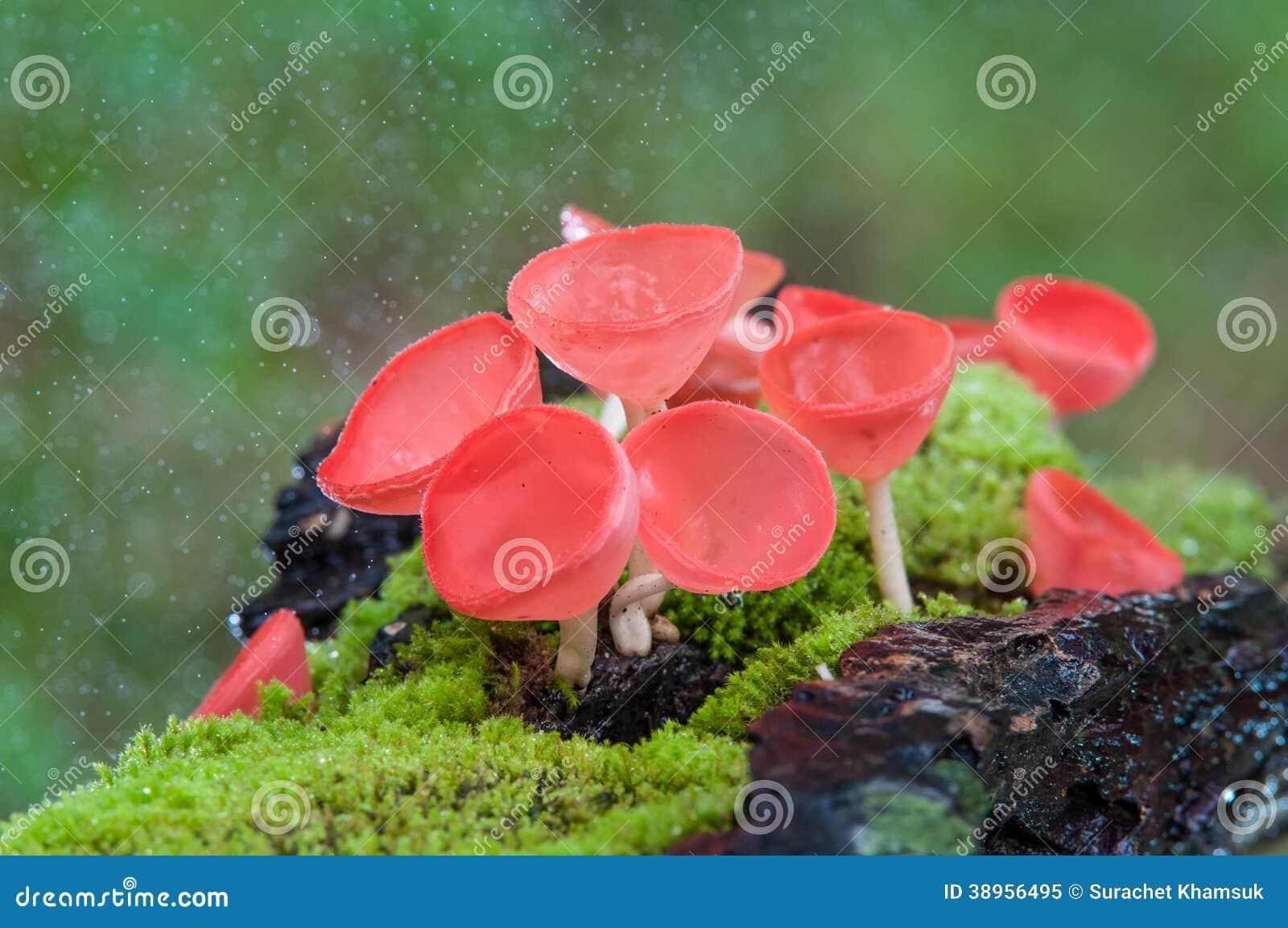 красные грибы фото