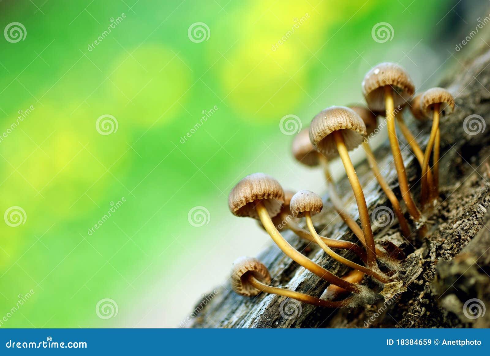 грибы группы