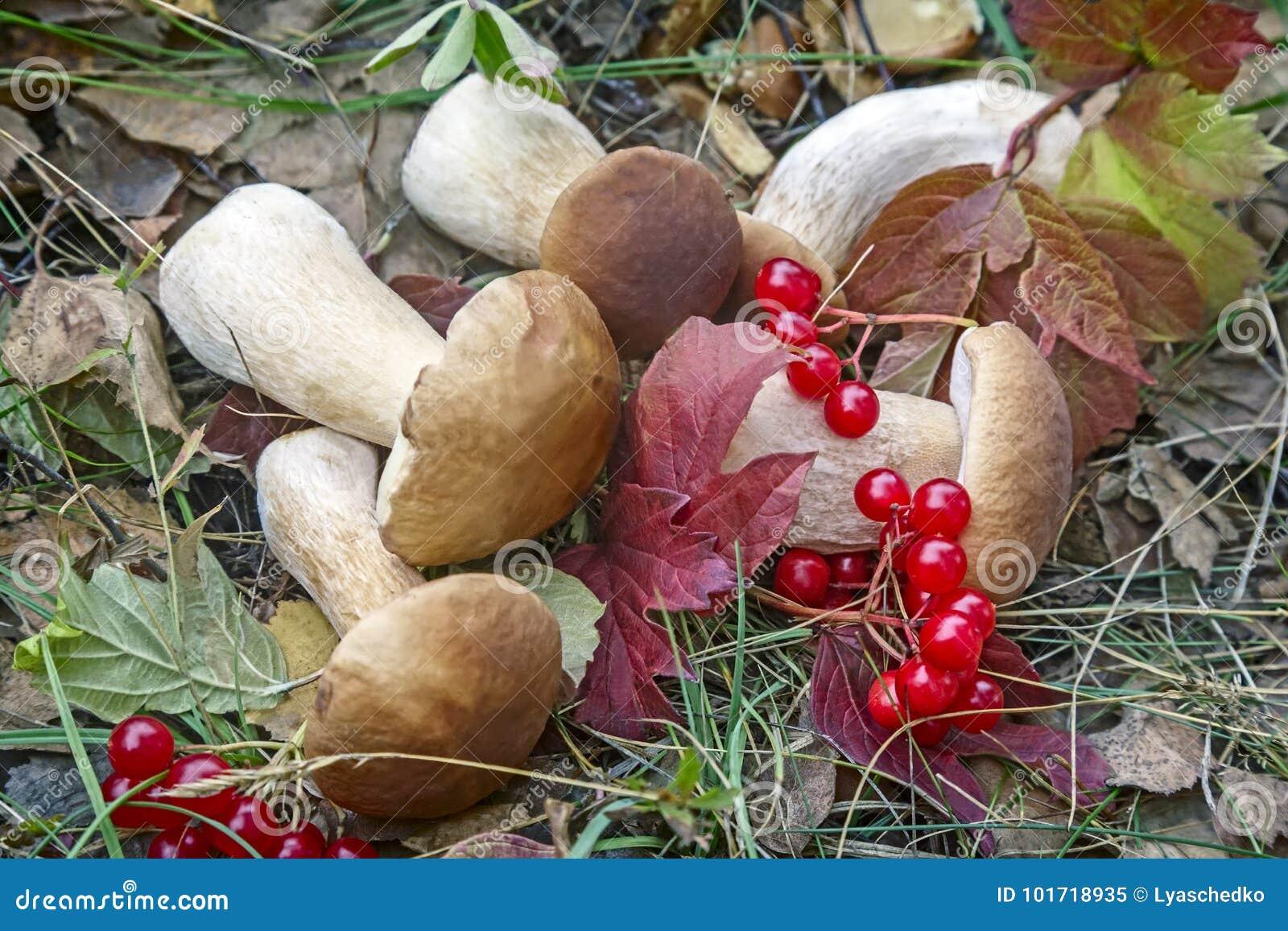 Грибы и одичалые ягоды в луге Стоковое Изображение ...