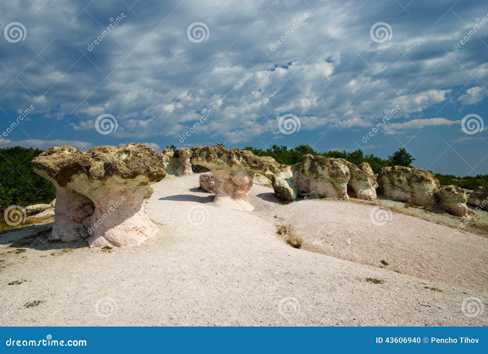 Грибы камня