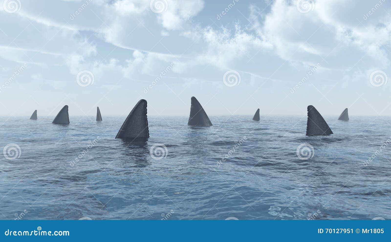 Группа в составе большие белые акулы
