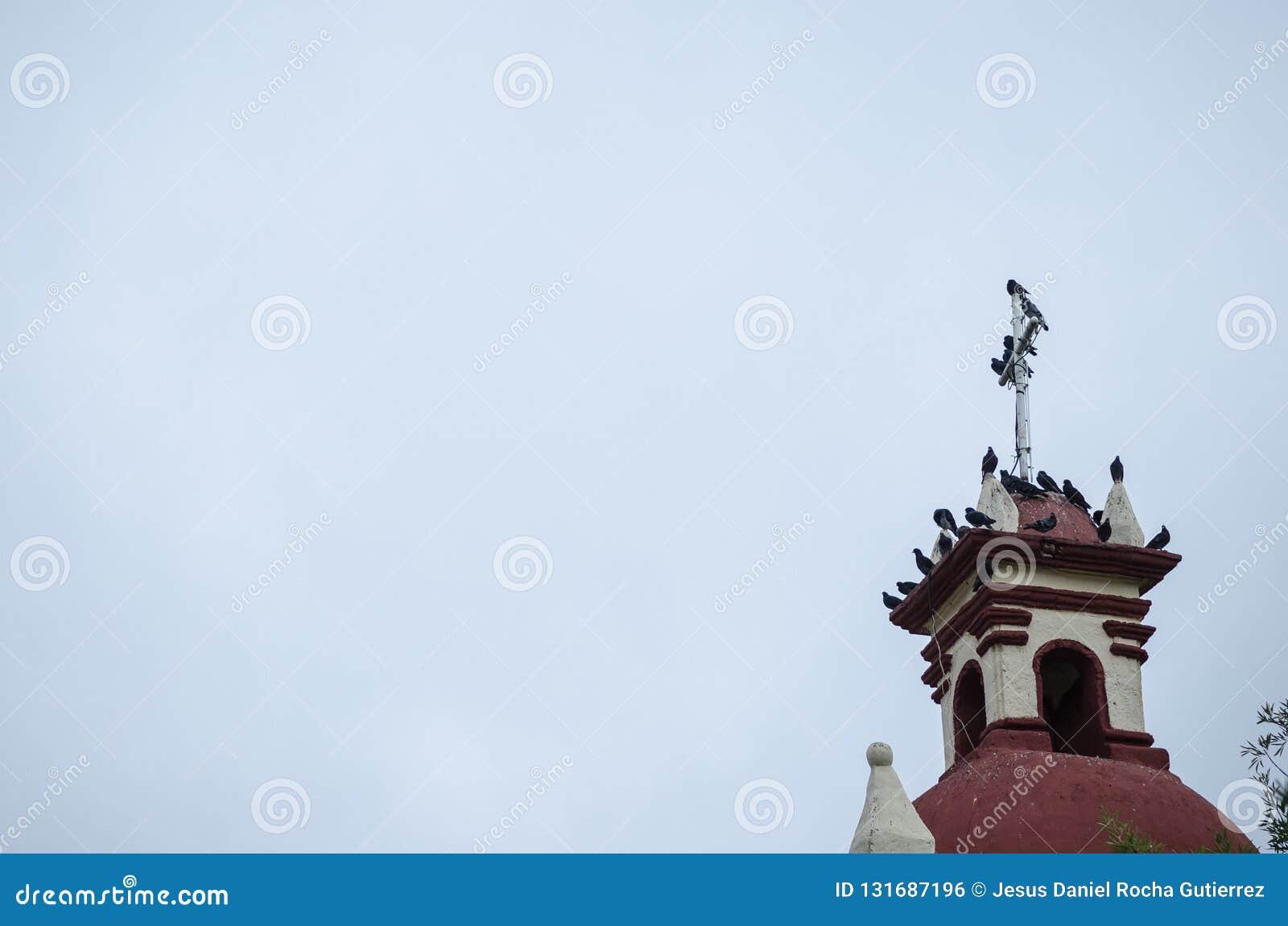 Группа в составе голуби стоя на башне старой церков, голуби отдыхая от длинного полета, космоса для текста, красивой предпосылки
