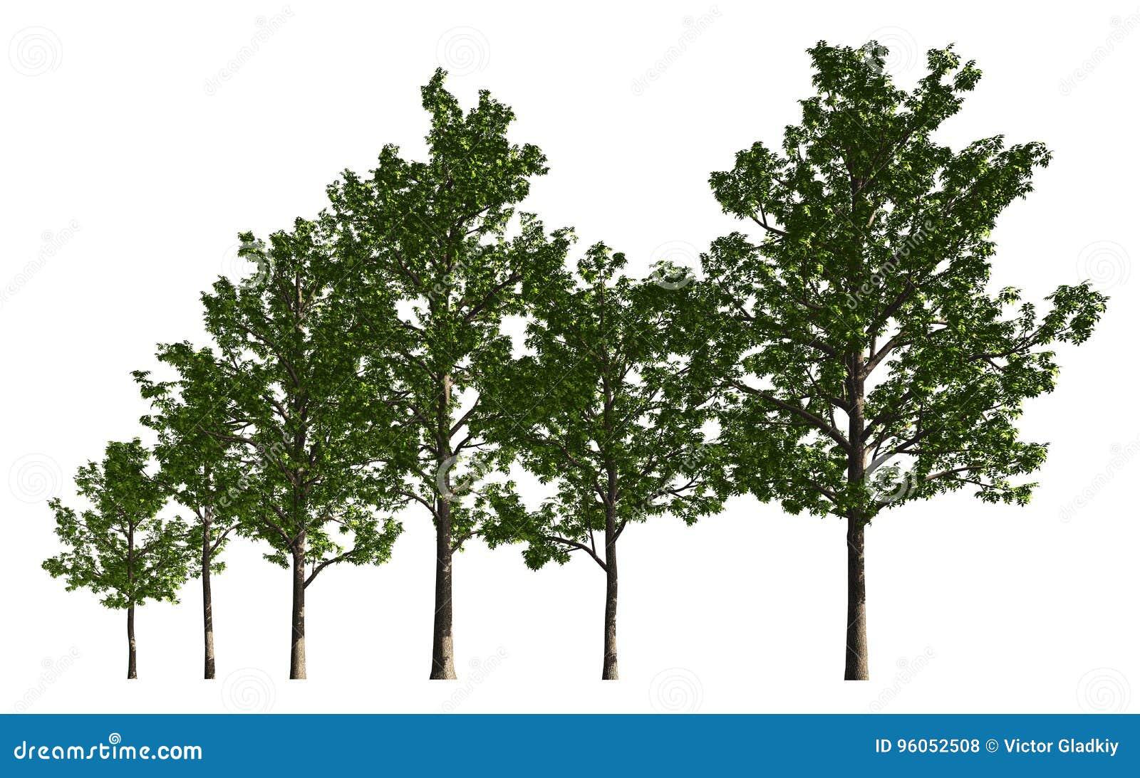 Группа в составе деревья изолированные на белой иллюстрации 3d