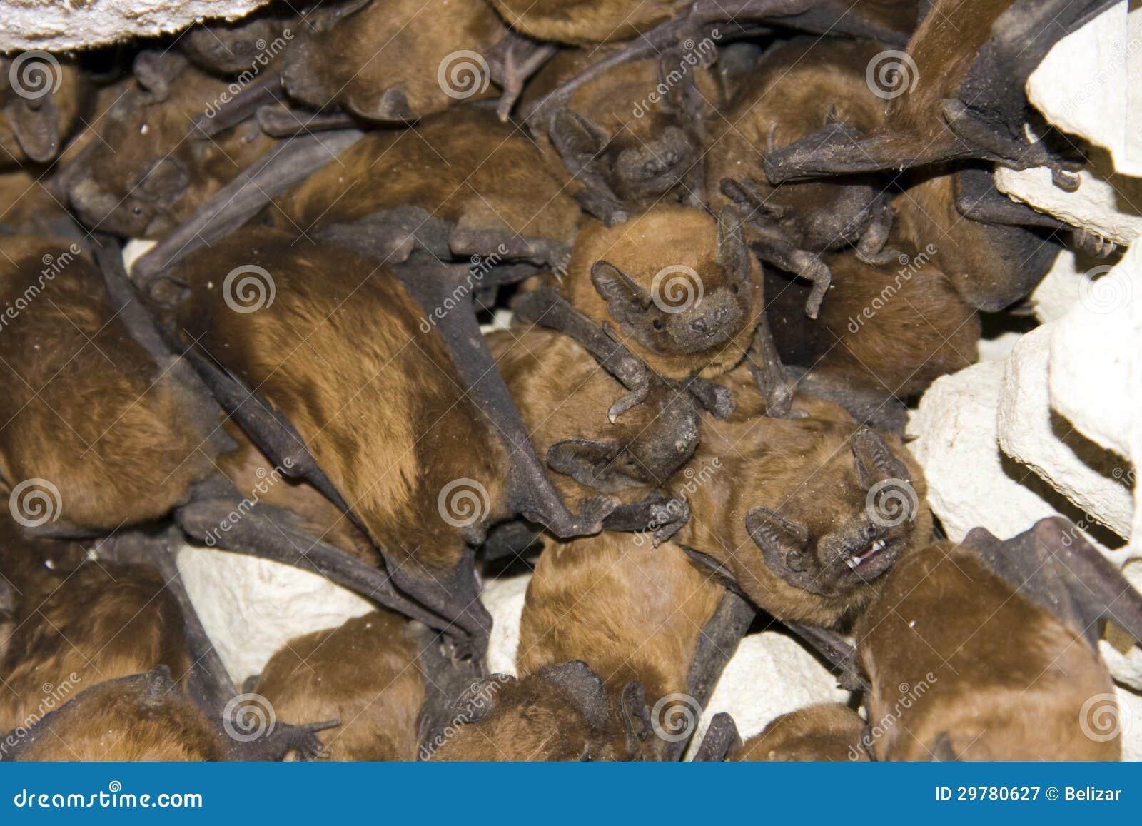 Толпа летучих мышей
