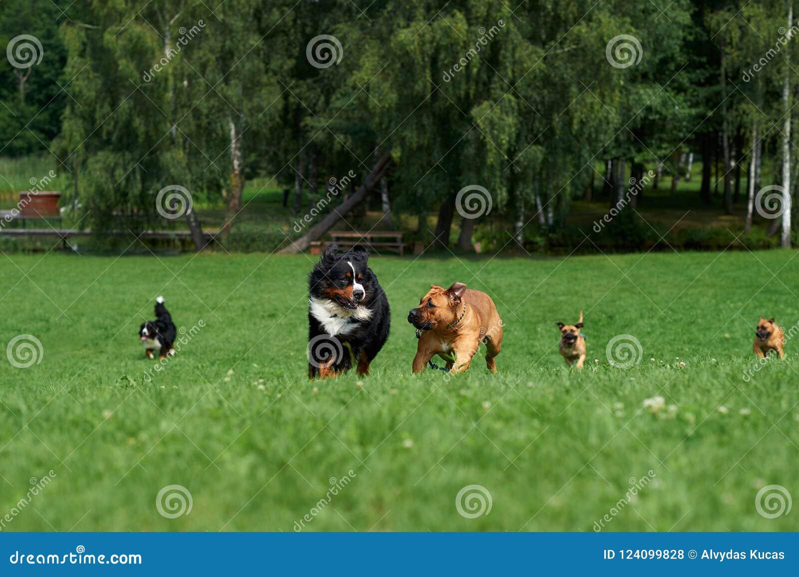 Группа в составе собаки участвует в гонке