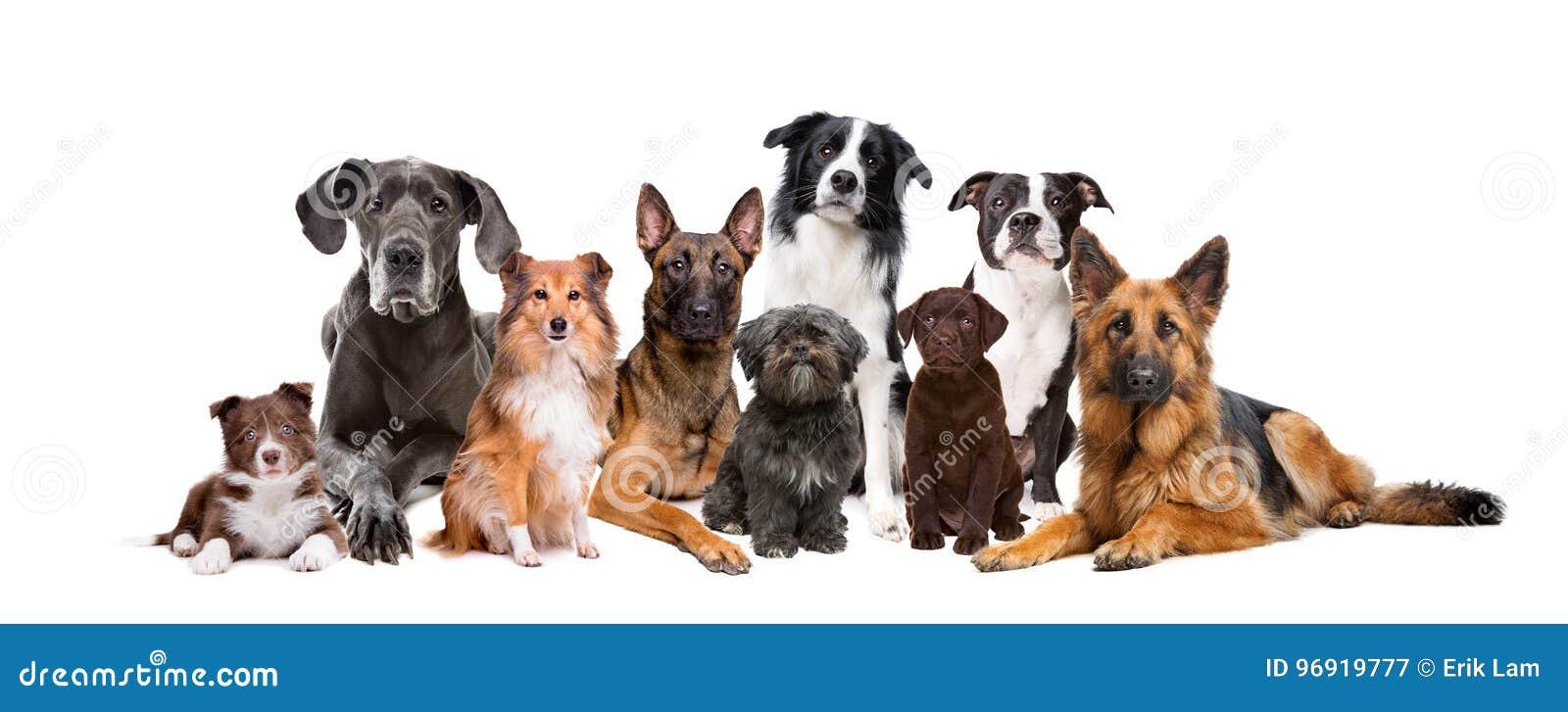 Группа в составе 9 собак