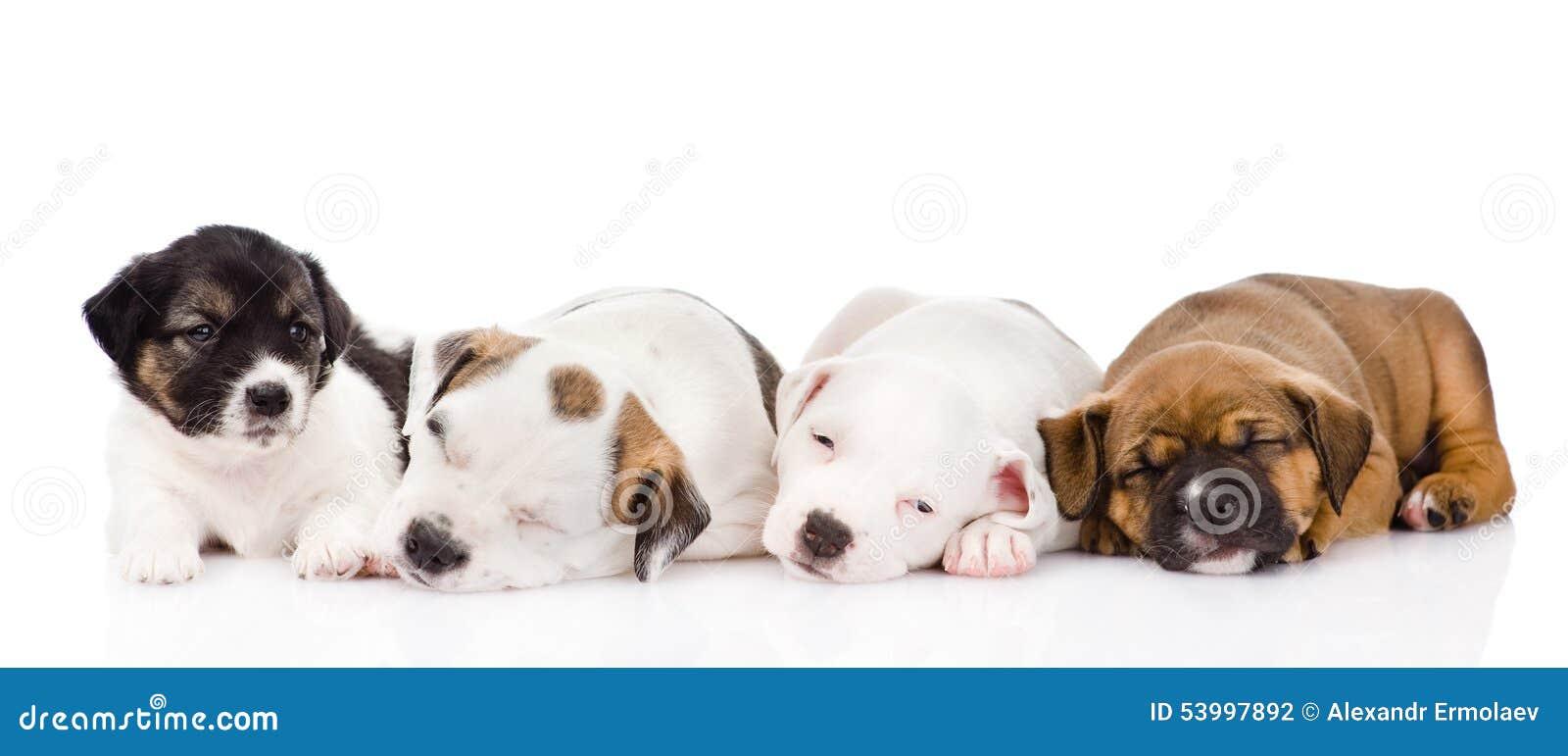 Группа в составе спать щенят На белой предпосылке