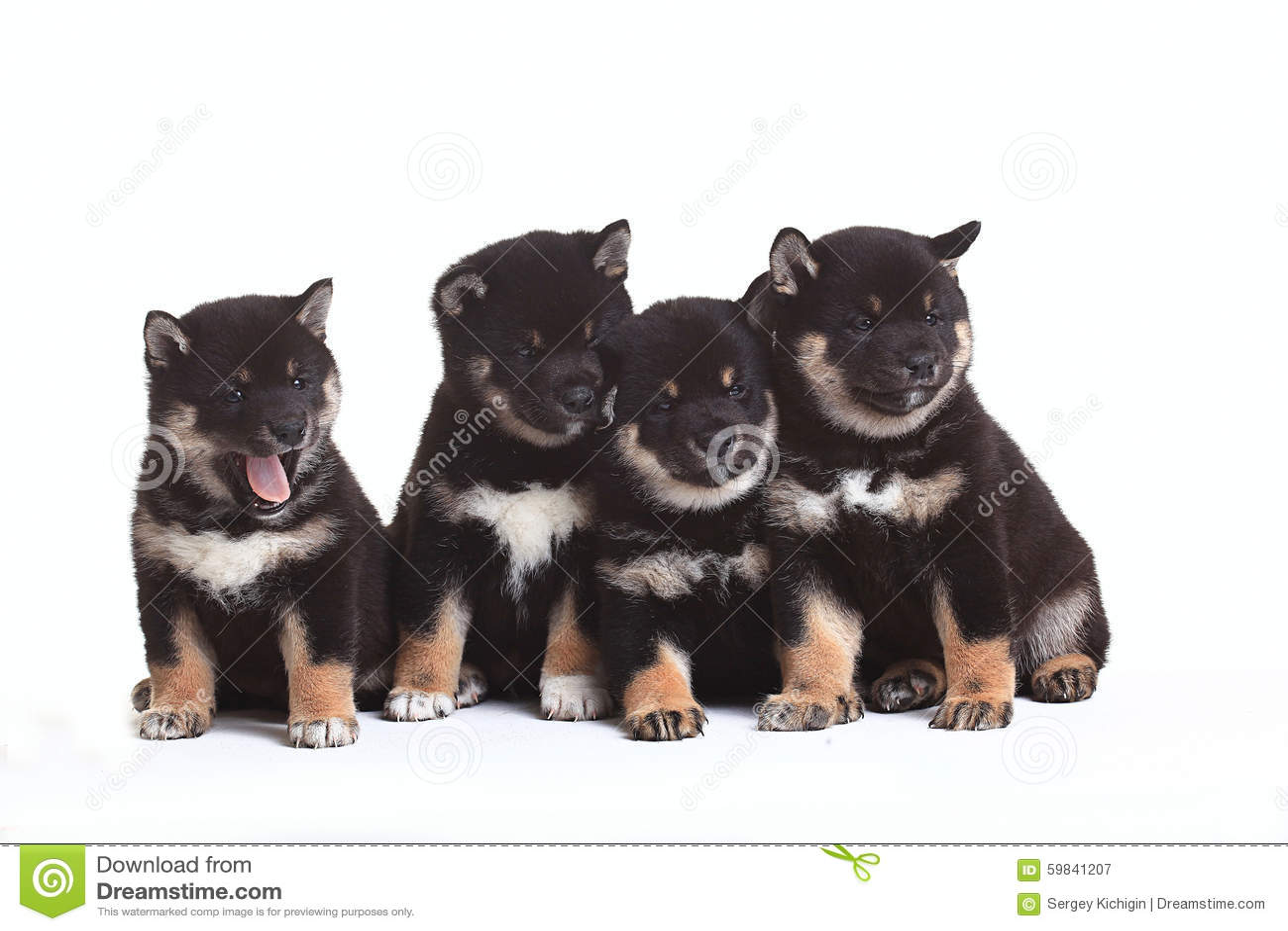 Группа в составе щенята