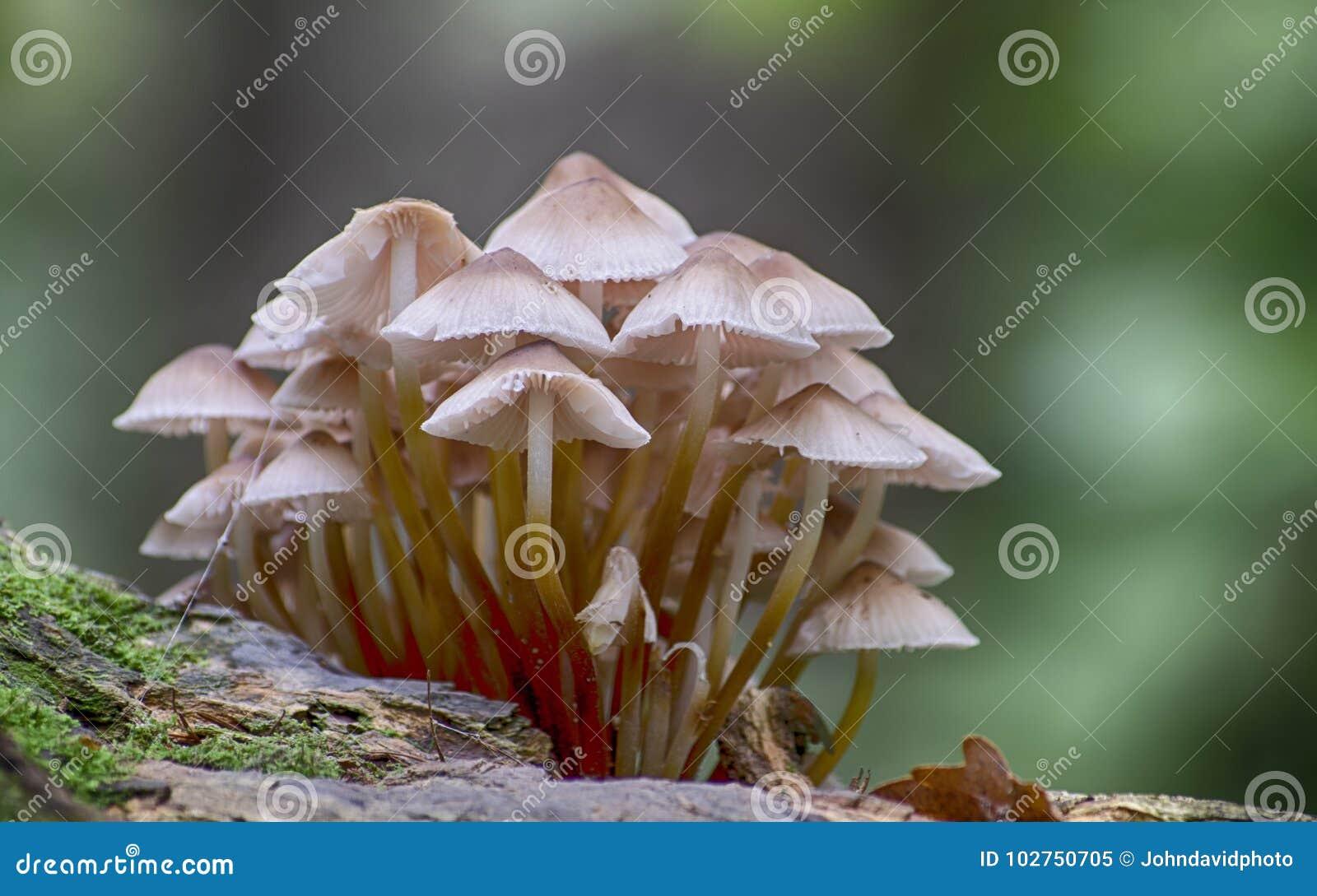 Группа грибков