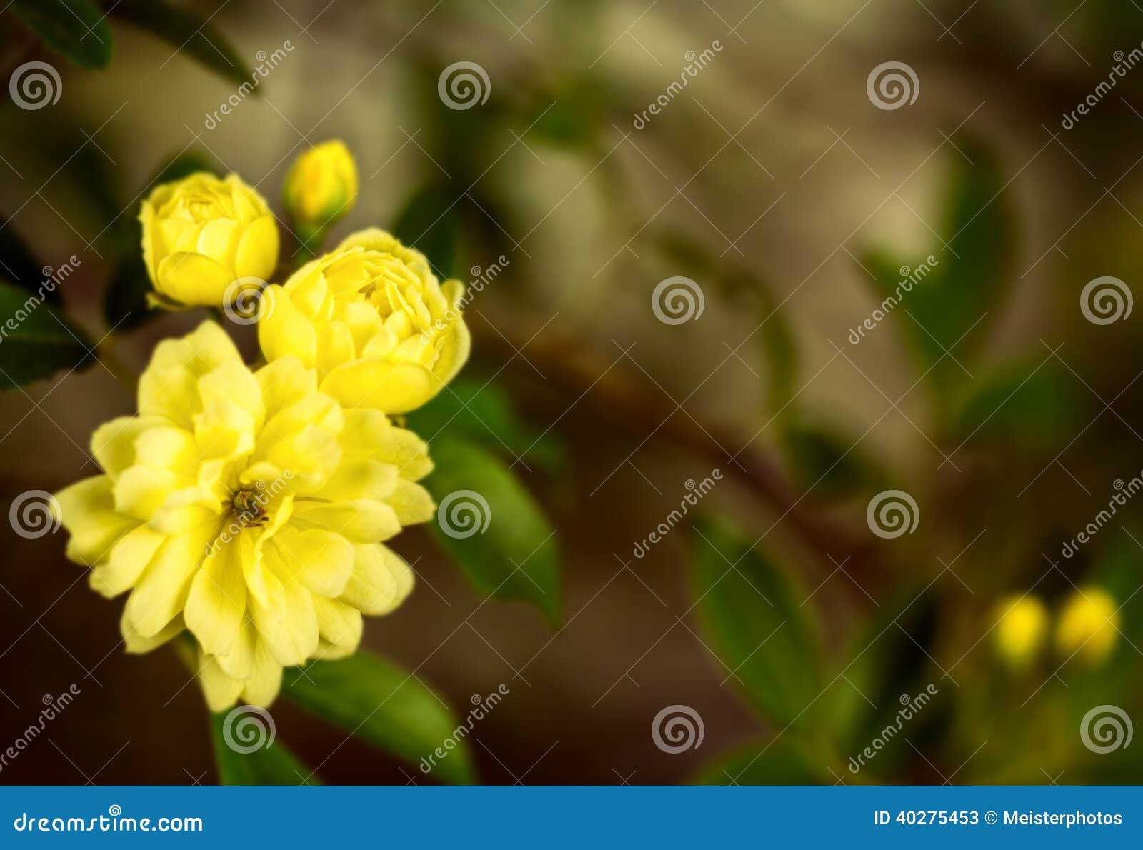Группа желтых роз, конец вверх