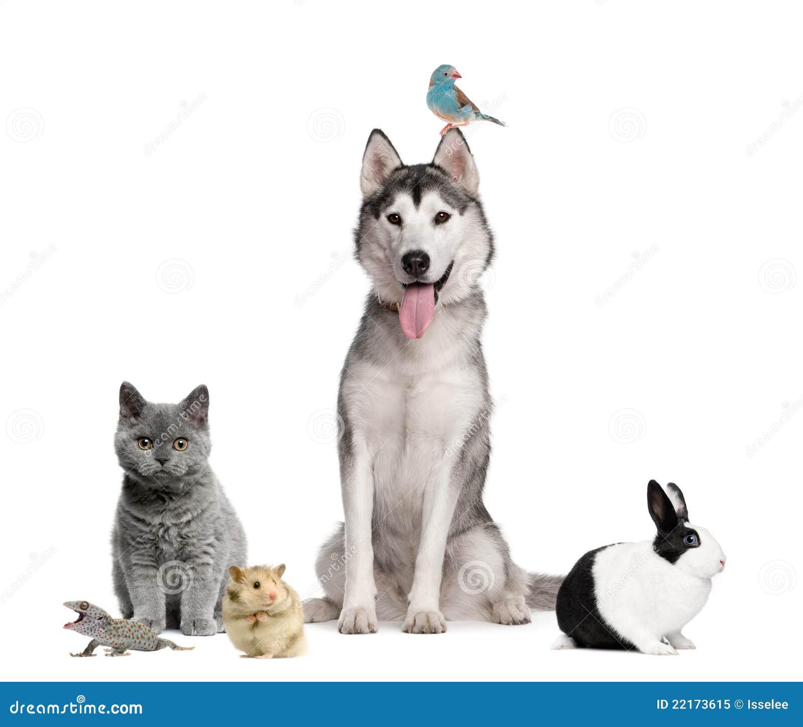 группа предпосылки передняя pets белизна