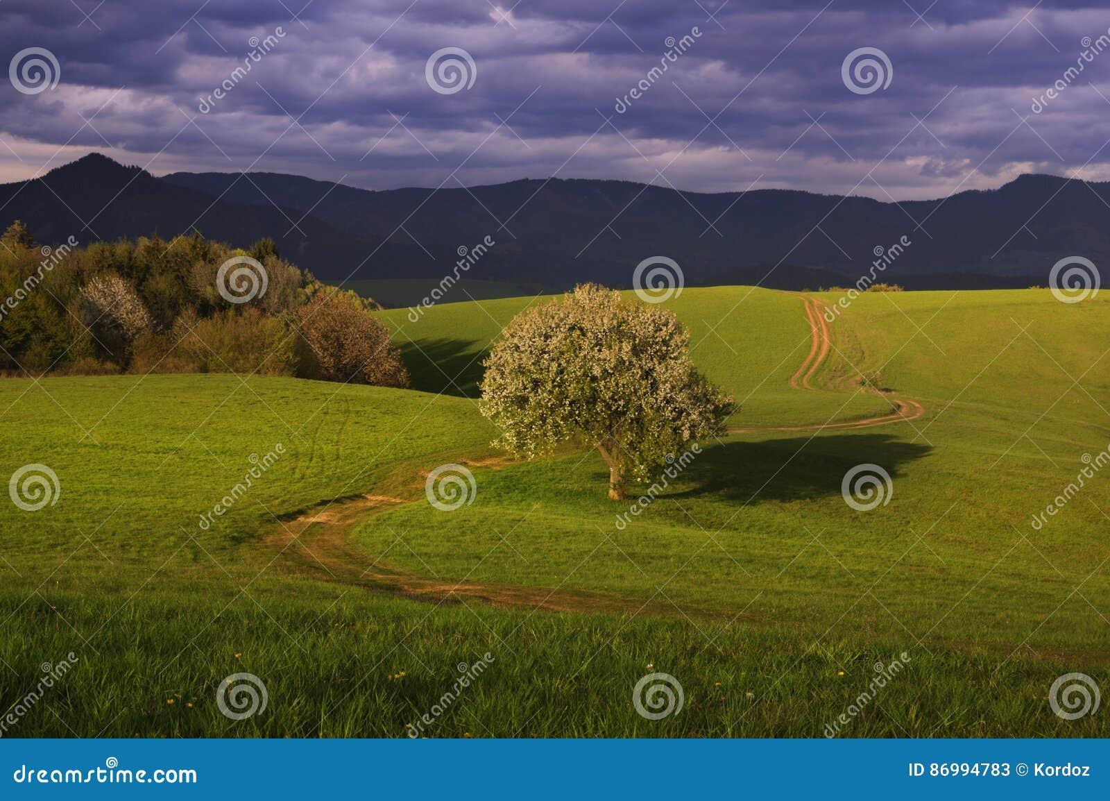 Грушевое дерев дерево и луга
