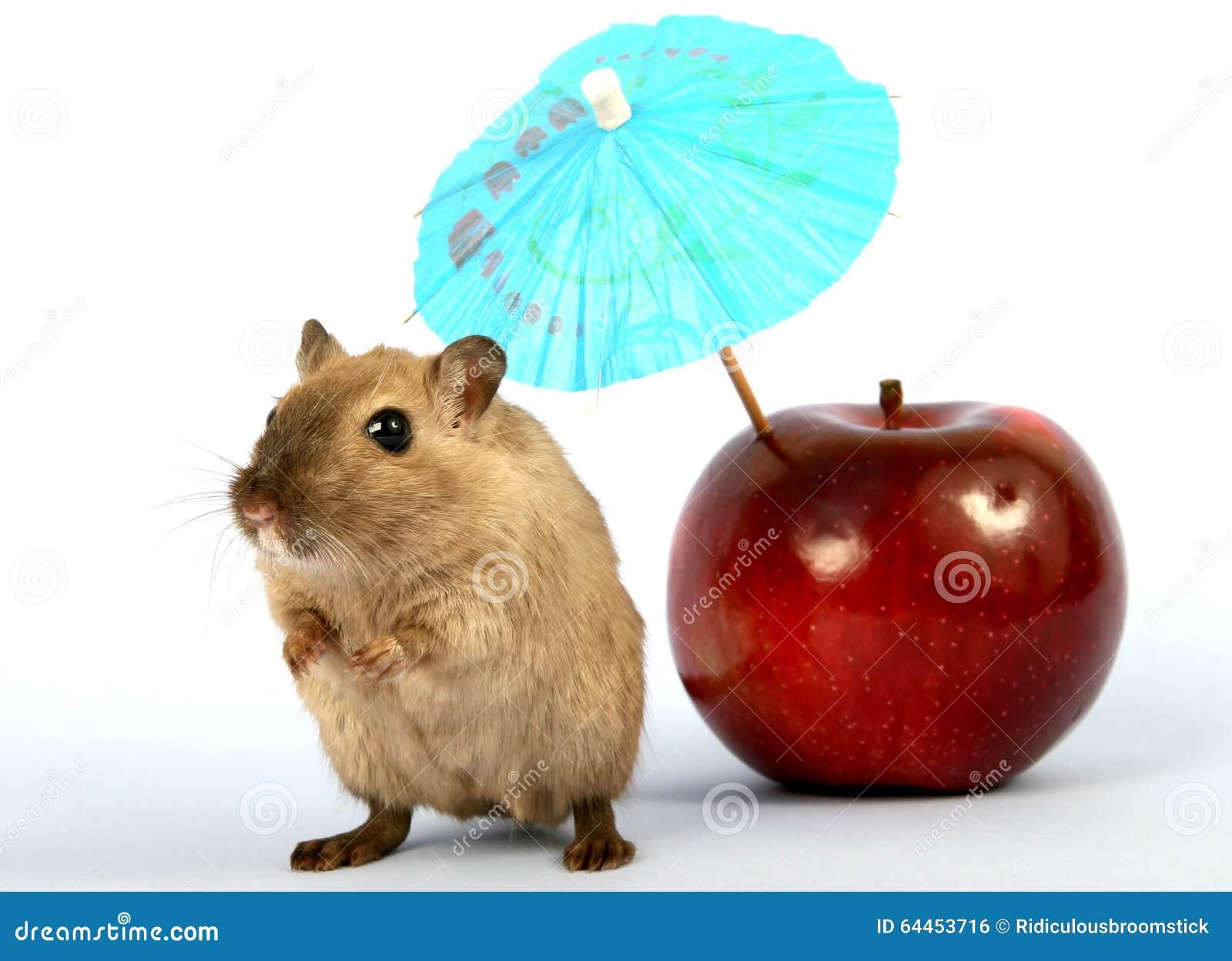 Грызун Брайна женский на летнем отпуске с зонтиком