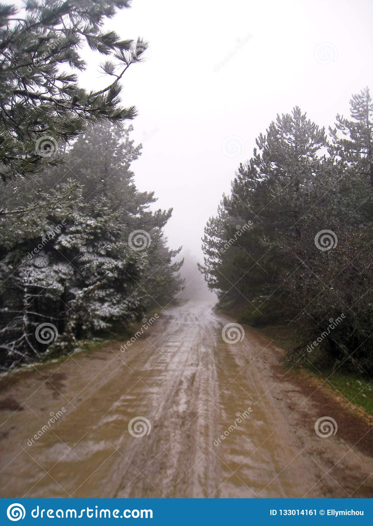 Грязная дорога с перспективой деревьев в тумане
